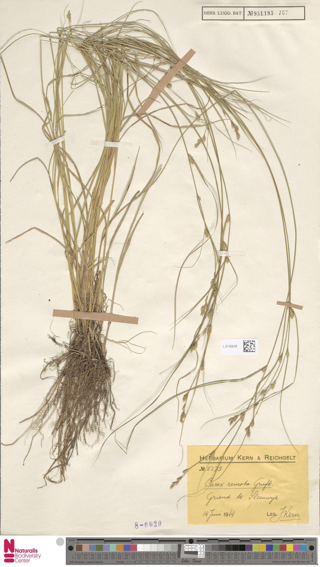 L.3140648 | Carex remota L.