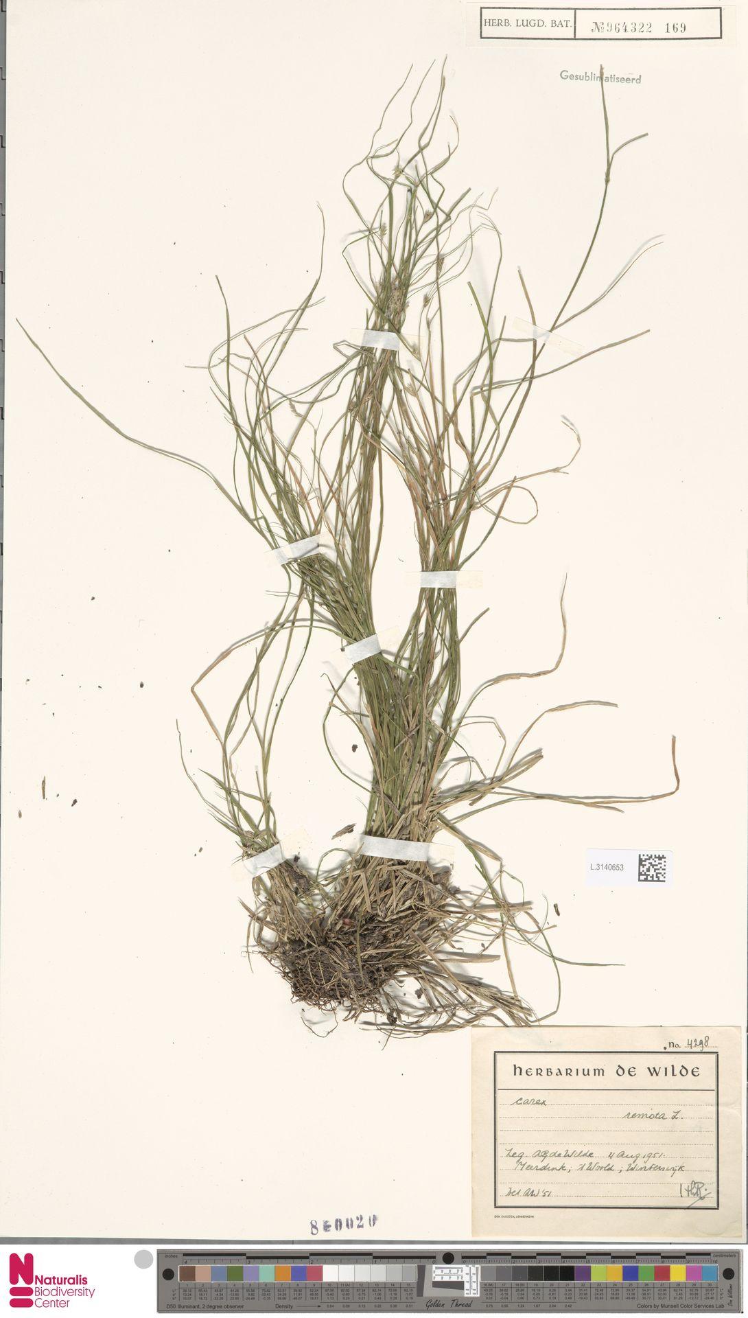 L.3140653 | Carex remota L.