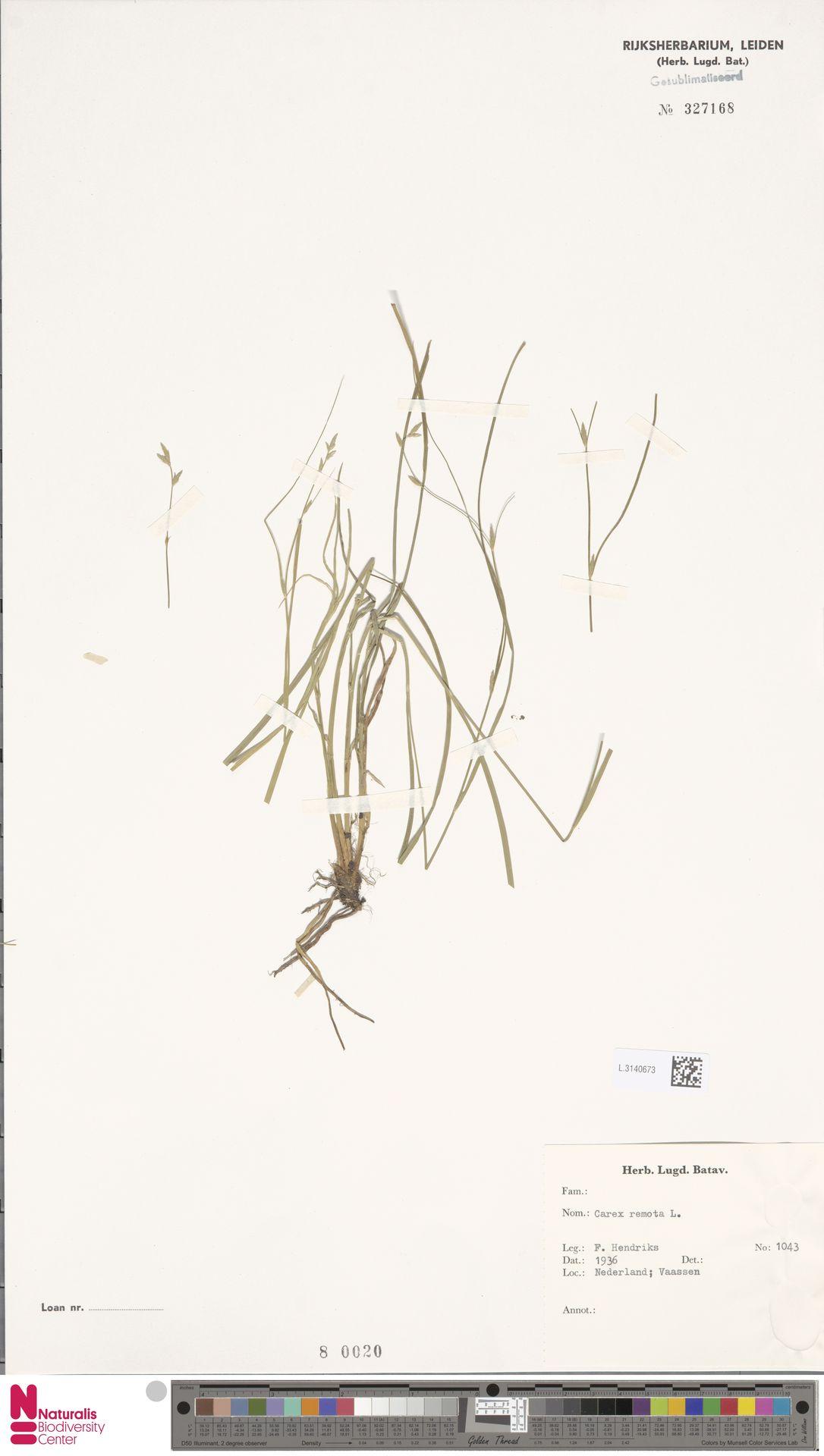L.3140673 | Carex remota L.