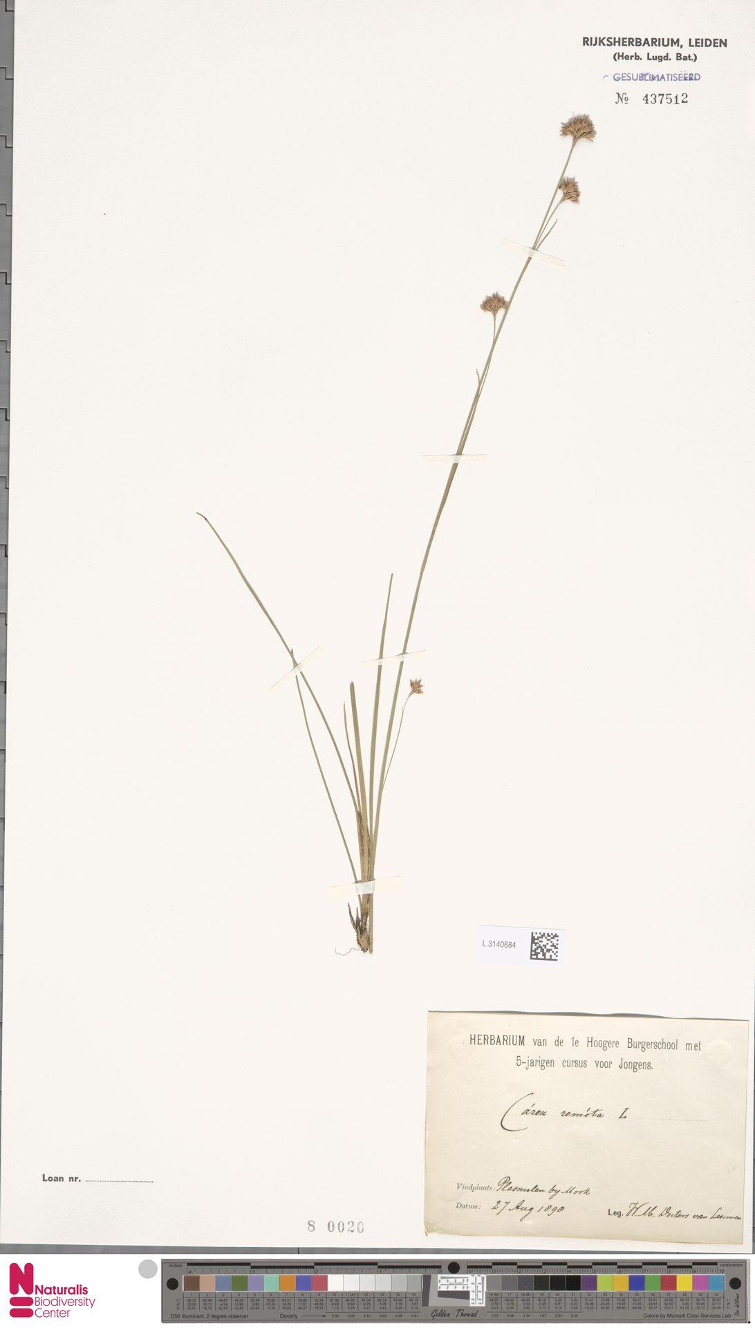 L.3140684 | Carex remota L.