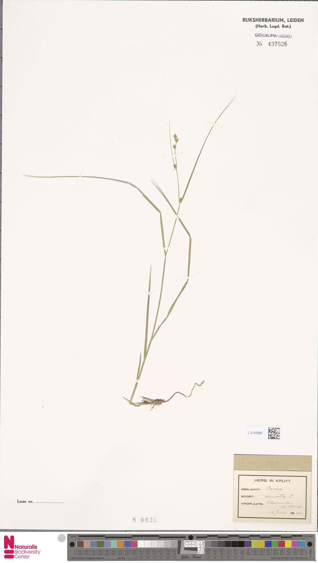 L.3140689 | Carex remota L.