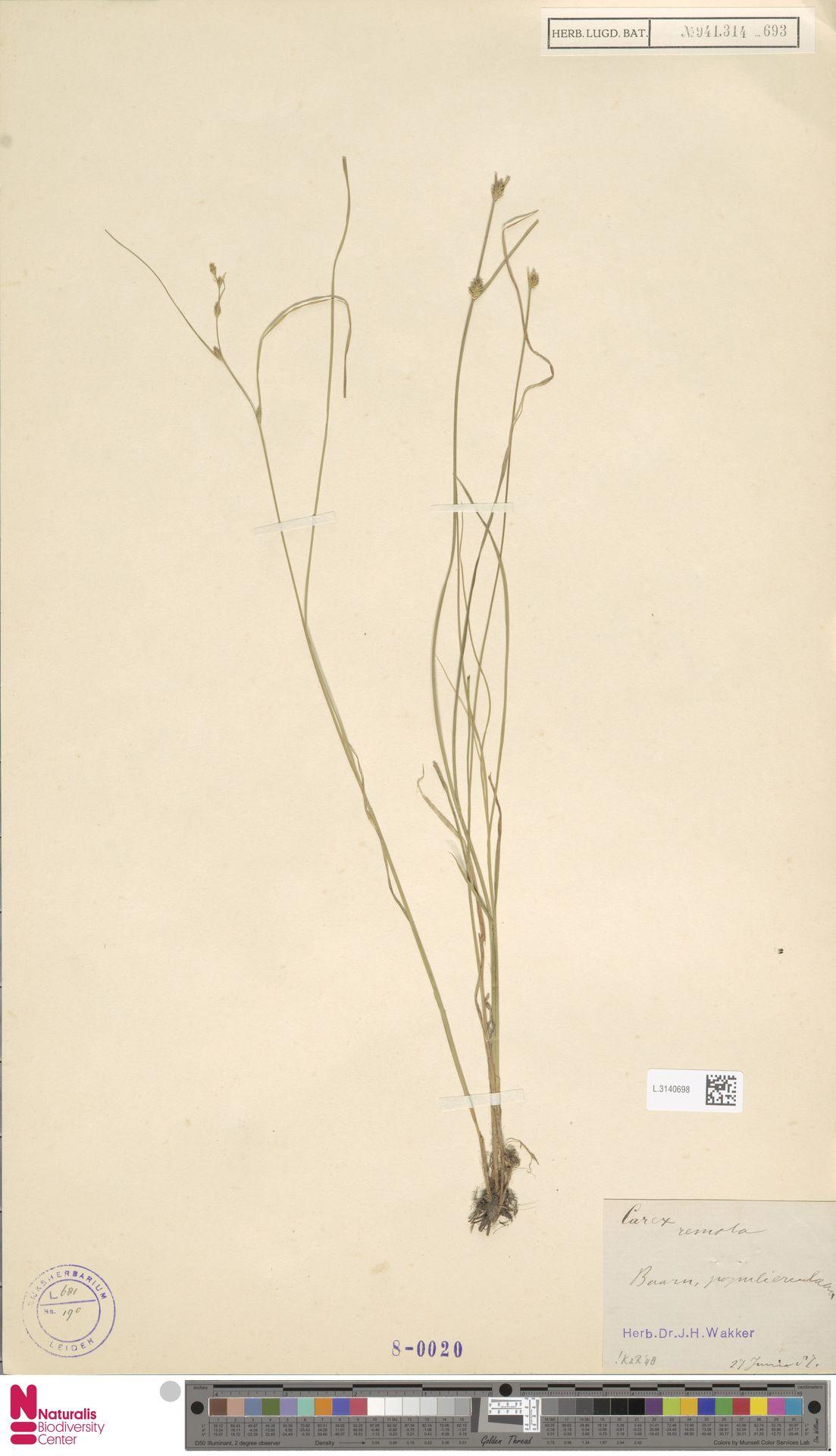 L.3140698   Carex remota L.