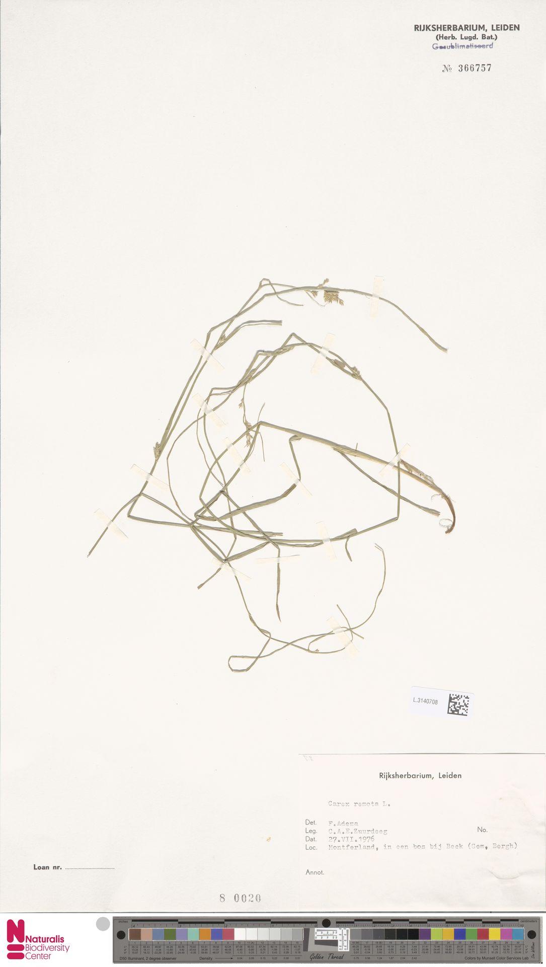L.3140708 | Carex remota L.