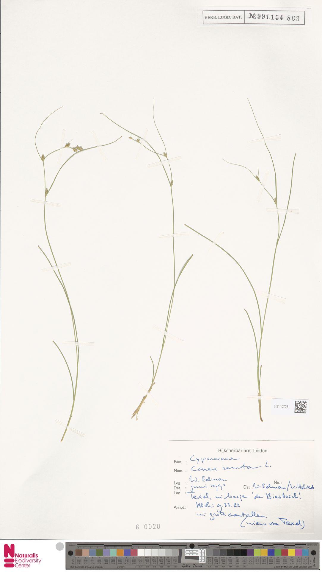 L.3140725 | Carex remota L.