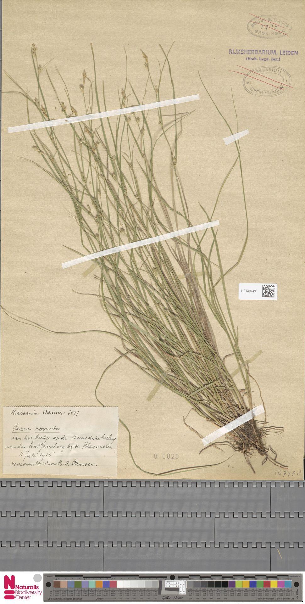 L.3140749 | Carex remota L.