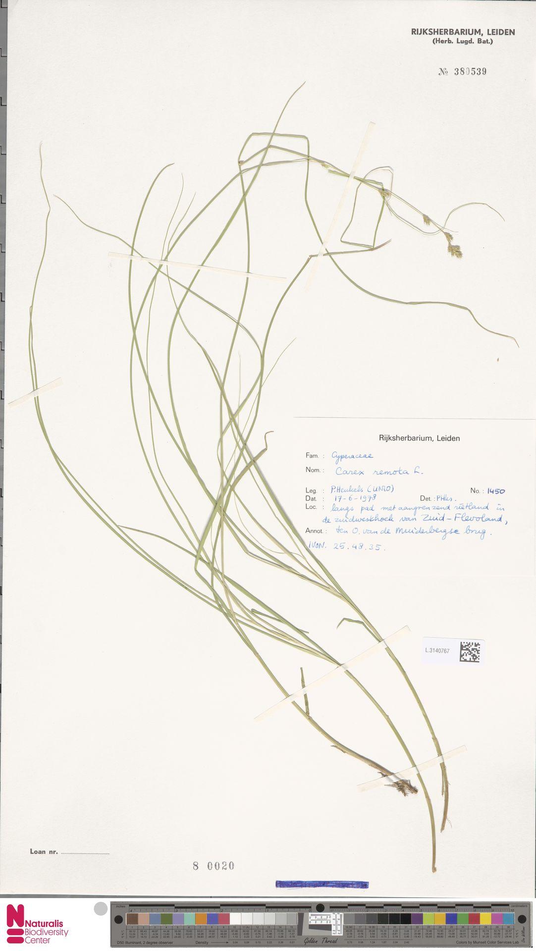 L.3140767 | Carex remota L.