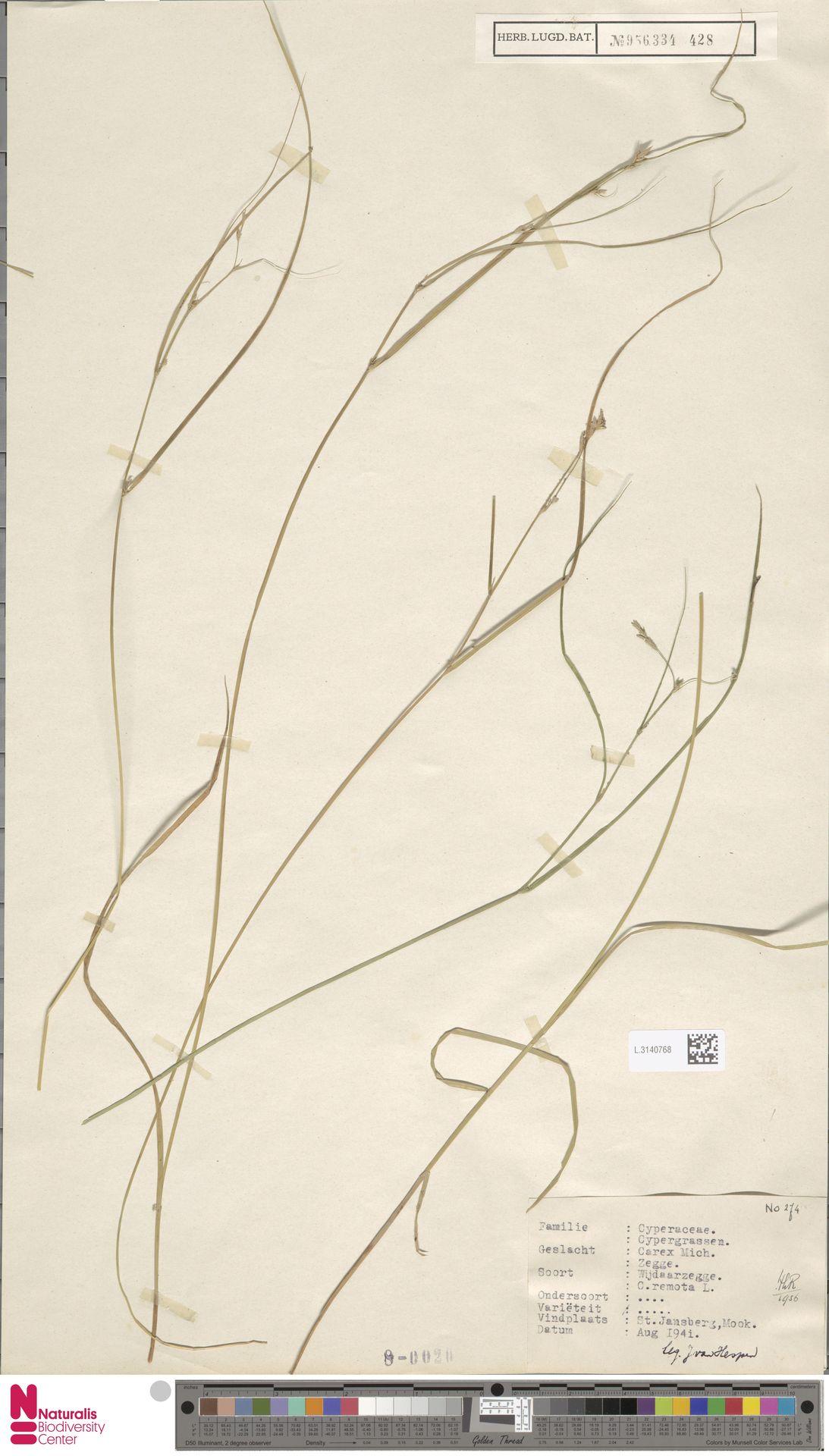 L.3140768 | Carex remota L.