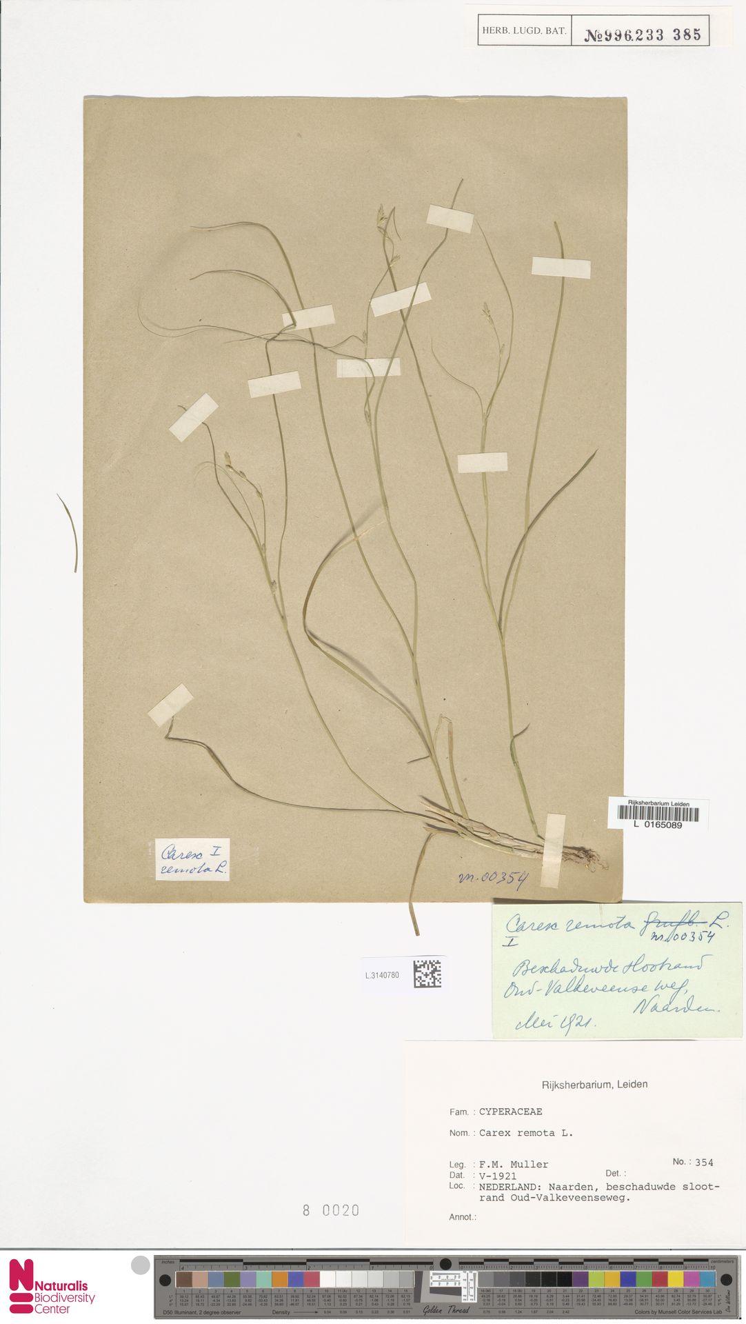 L.3140780 | Carex remota L.