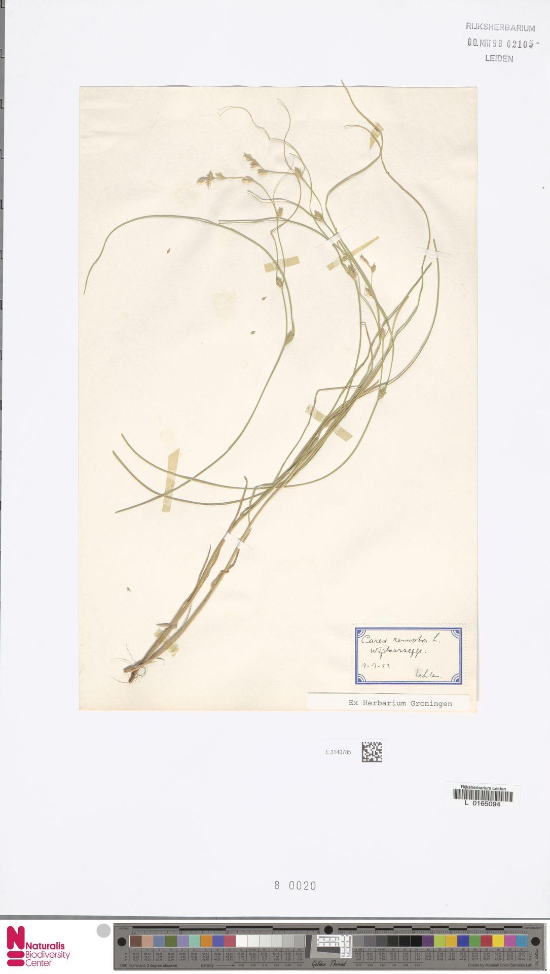 L.3140785 | Carex remota L.