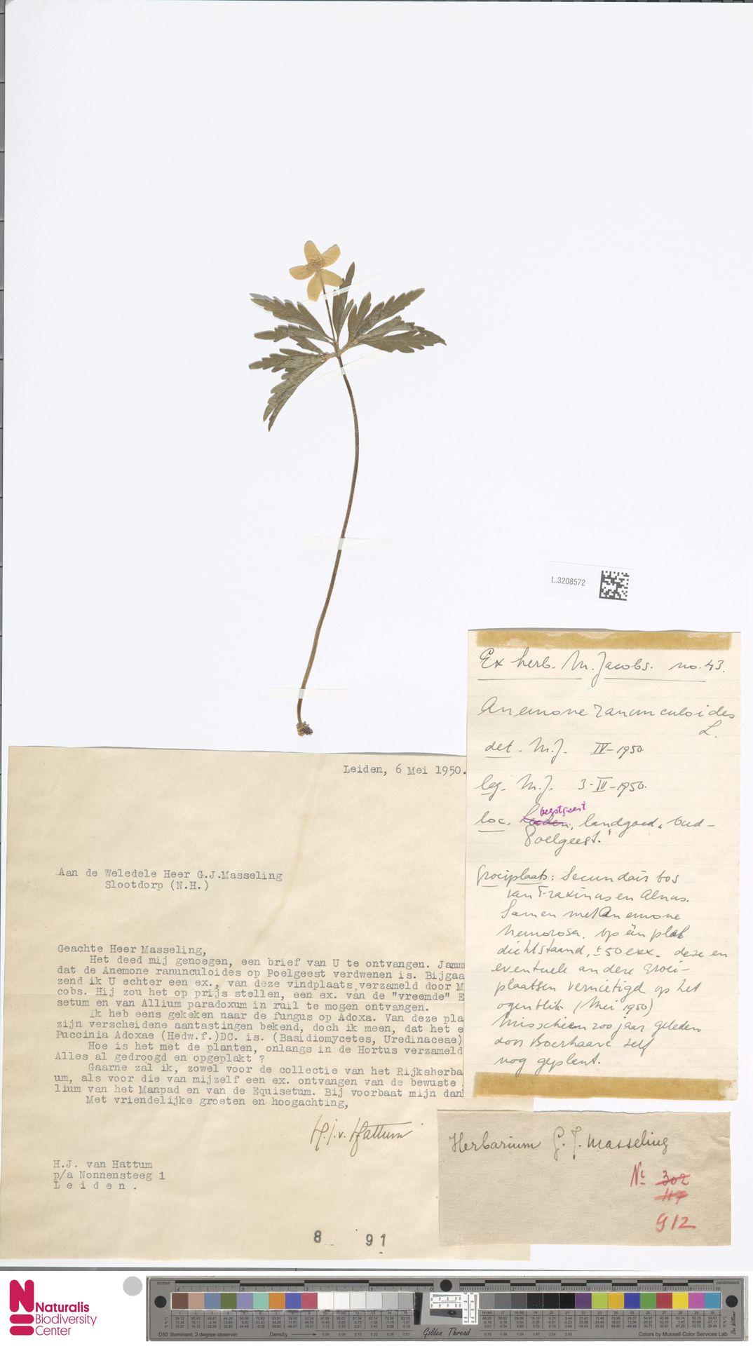 L.3208572 | Anemone ranunculoides L.