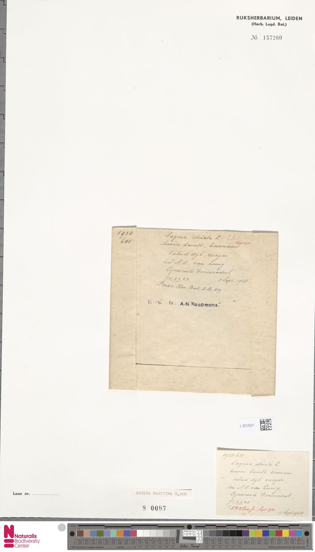 L.3212527 | Sagina maritima G.Don