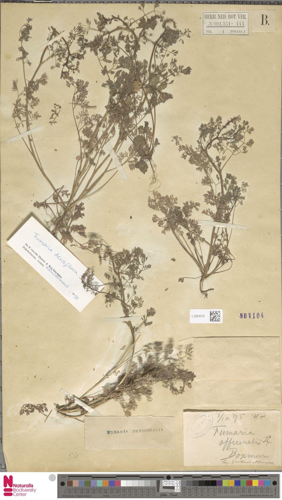 L.3224270 | Fumaria officinalis L.