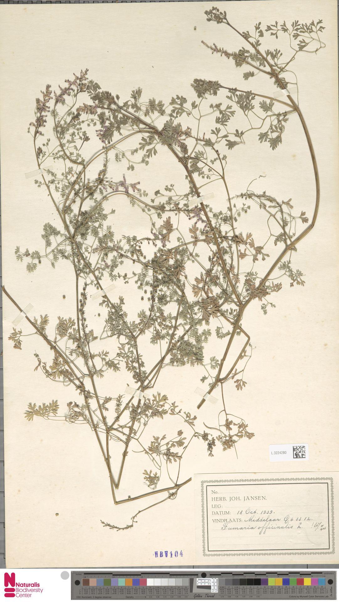 L.3224280 | Fumaria officinalis L.