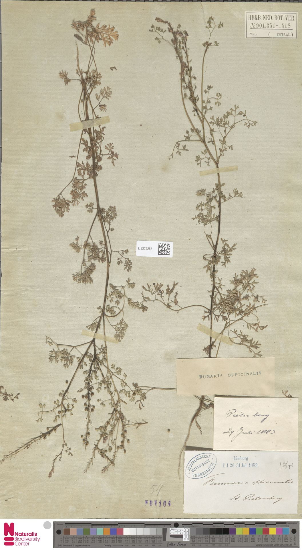 L.3224287   Fumaria officinalis L.