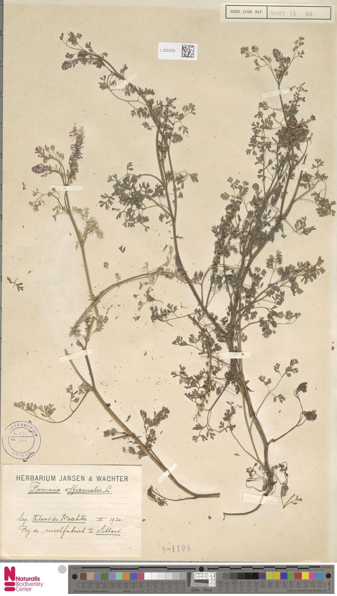 L.3224335 | Fumaria officinalis L.