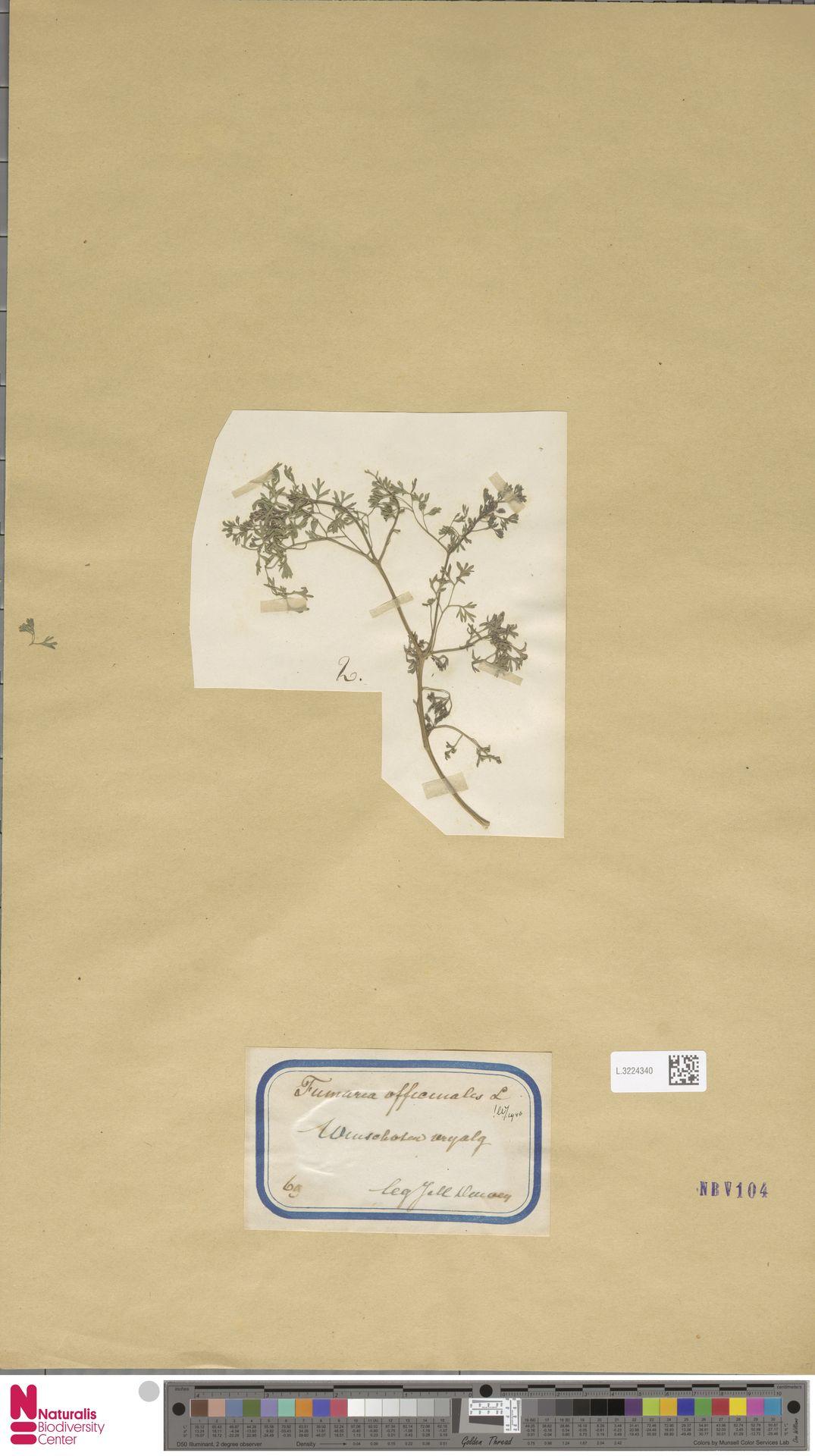 L.3224340 | Fumaria officinalis L.