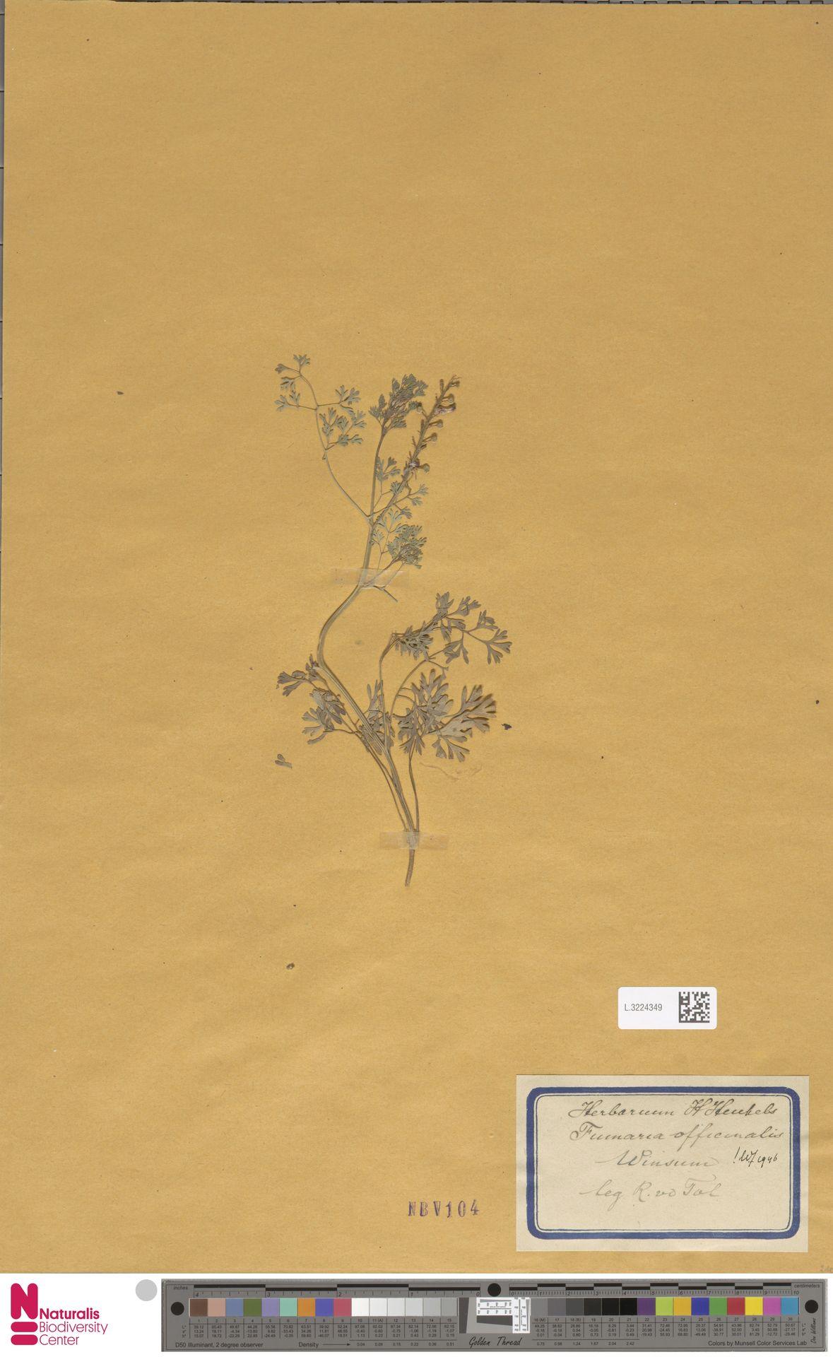 L.3224349   Fumaria officinalis L.