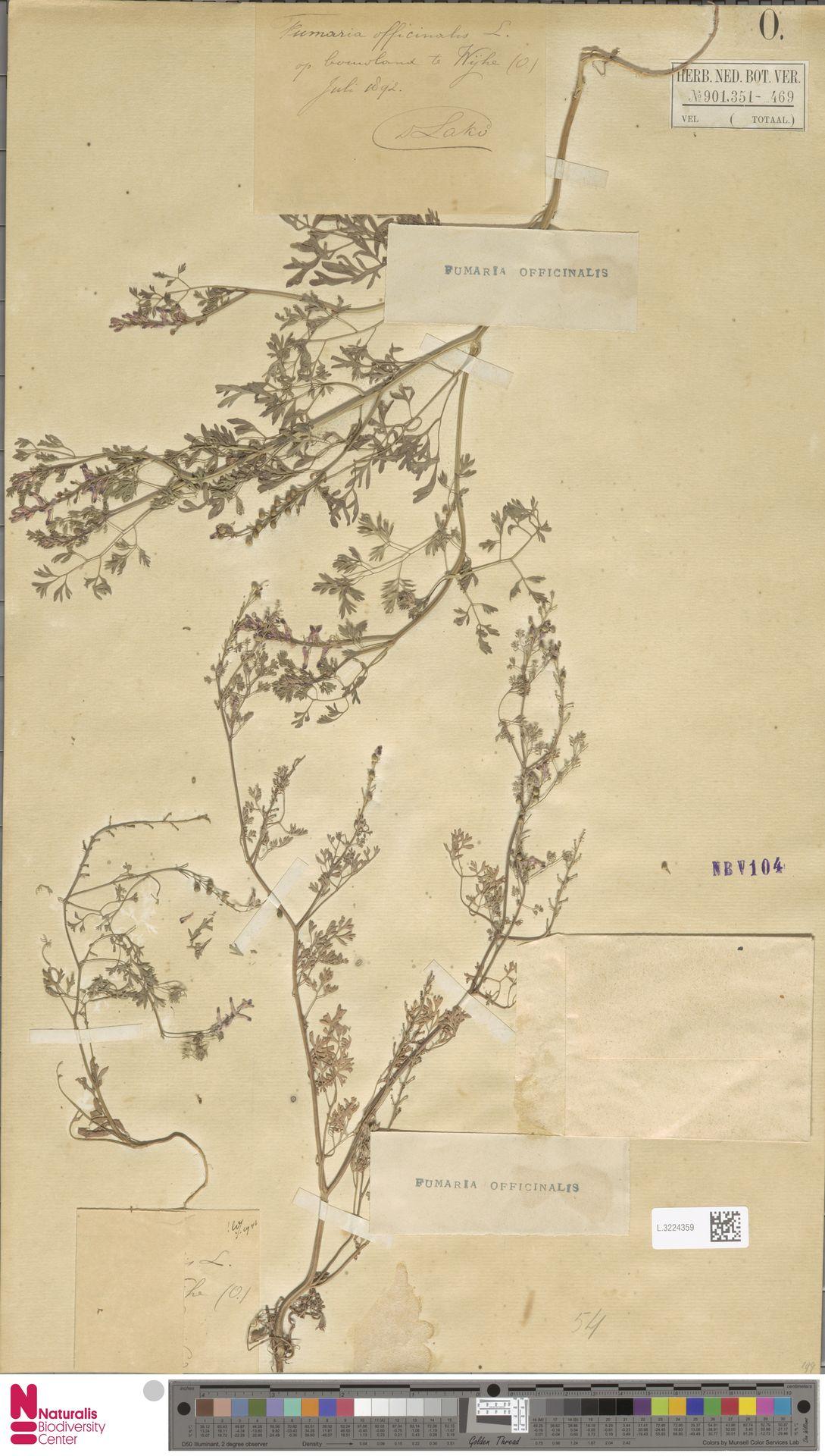 L.3224359 | Fumaria officinalis L.
