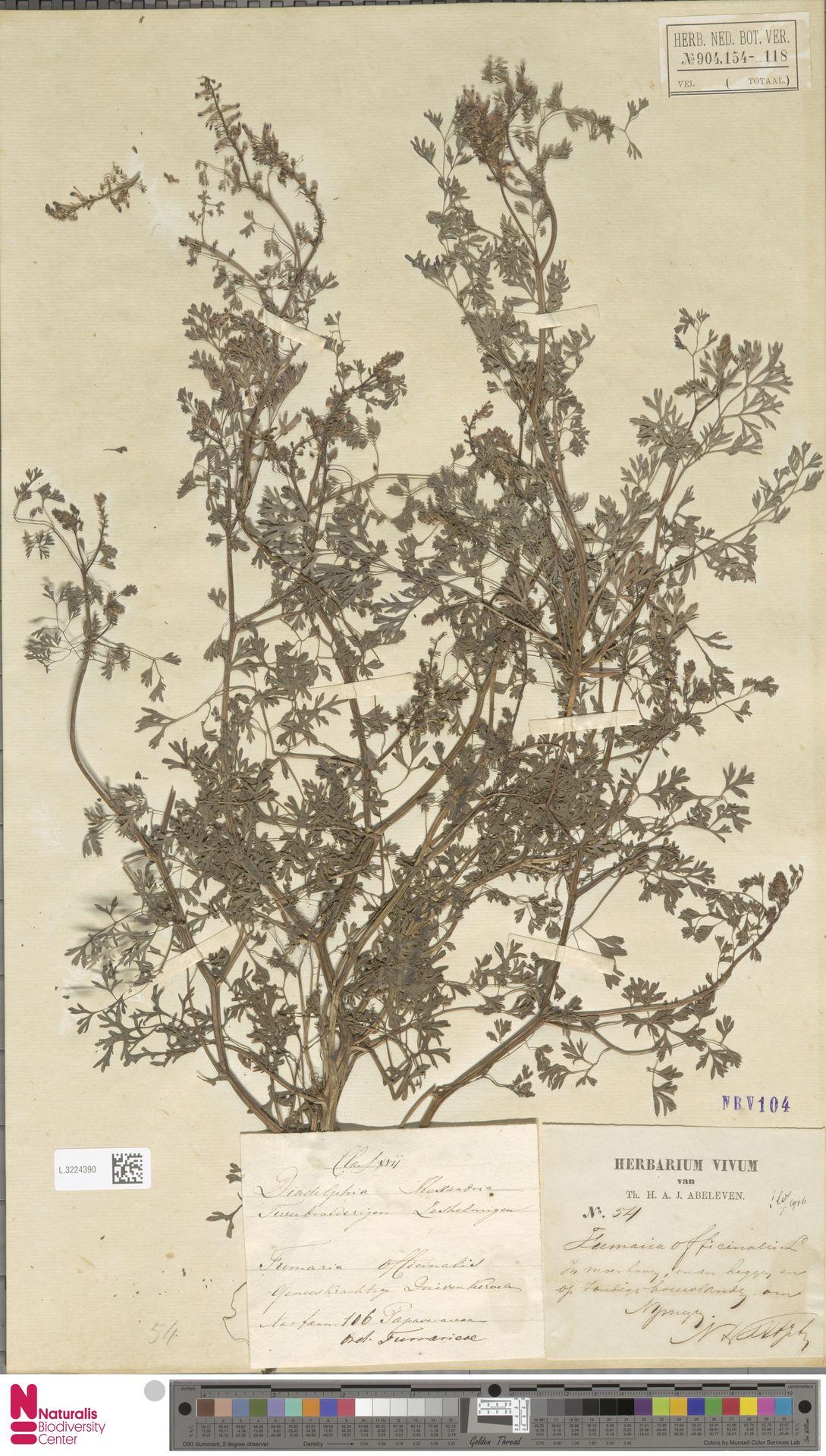 L.3224390 | Fumaria officinalis L.