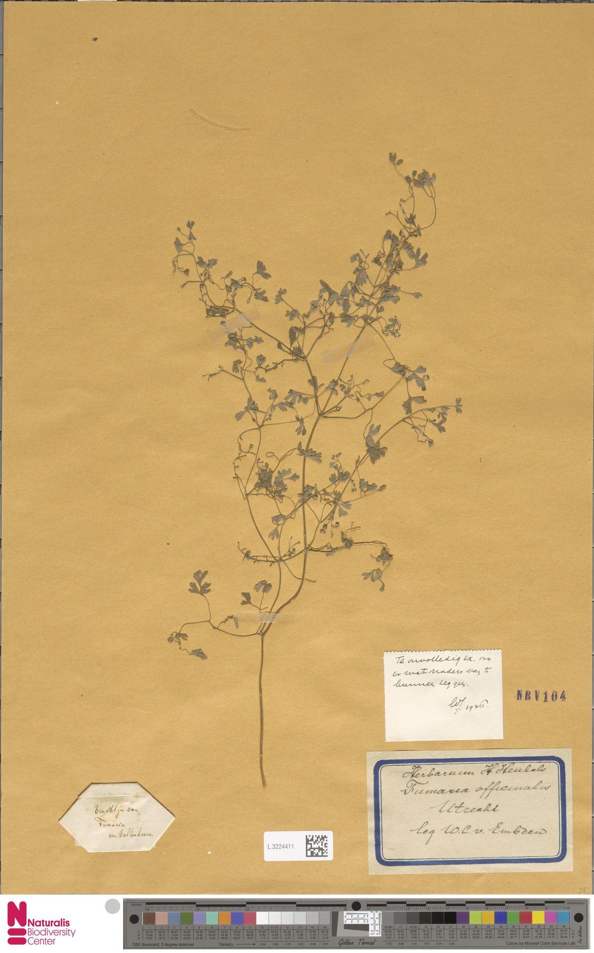 L.3224411   Fumaria officinalis L.