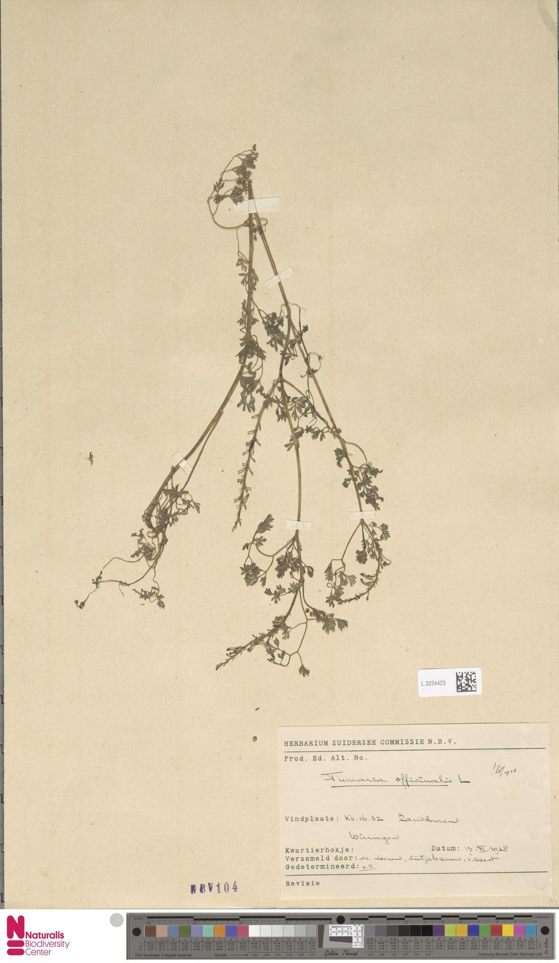 L.3224423 | Fumaria officinalis L.