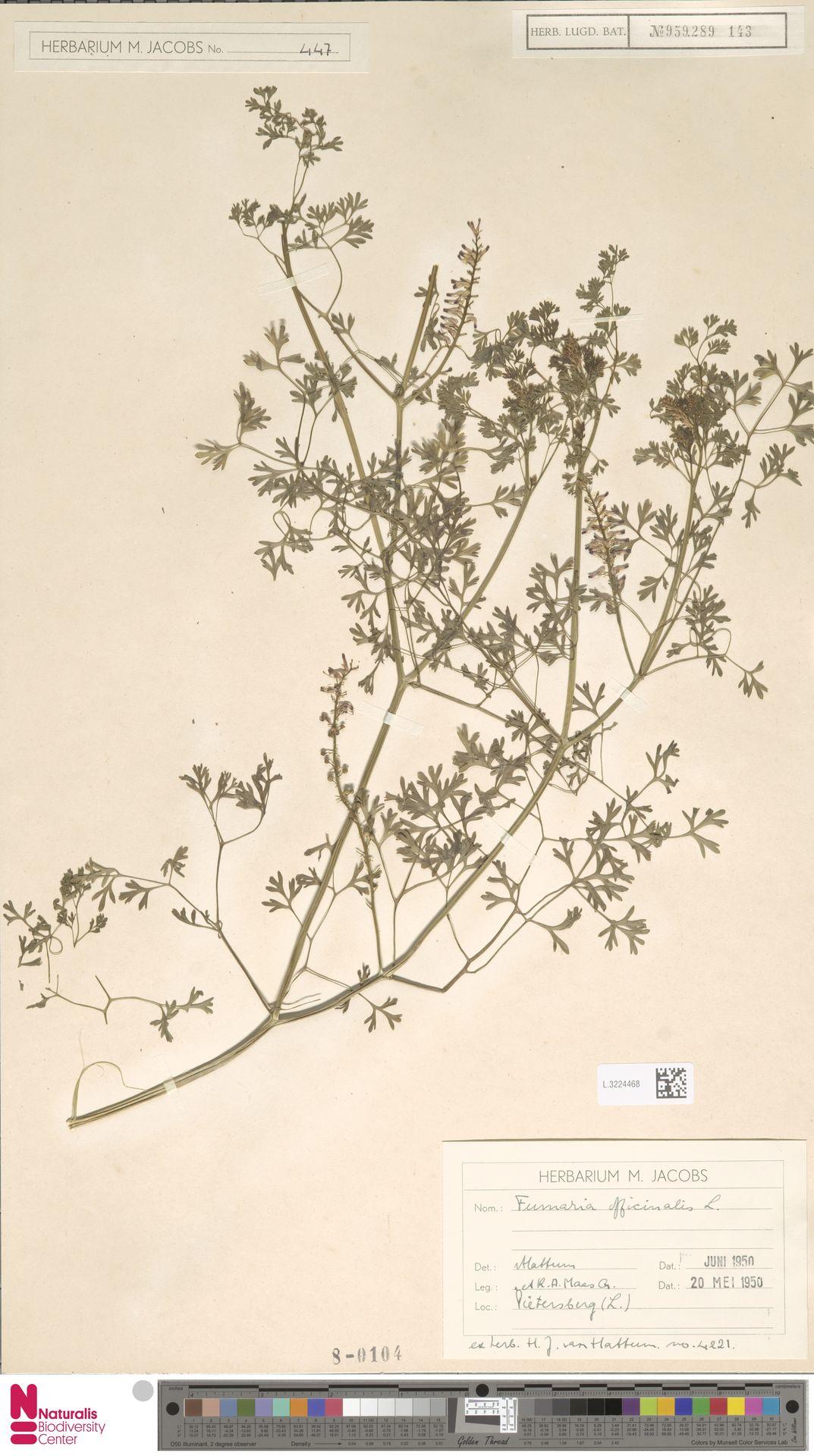L.3224468   Fumaria officinalis L.