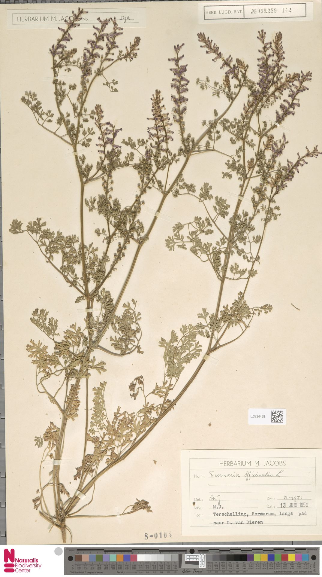 L.3224469 | Fumaria officinalis L.