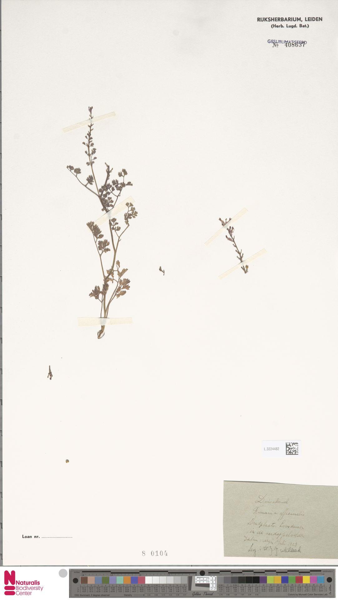 L.3224482   Fumaria officinalis L.