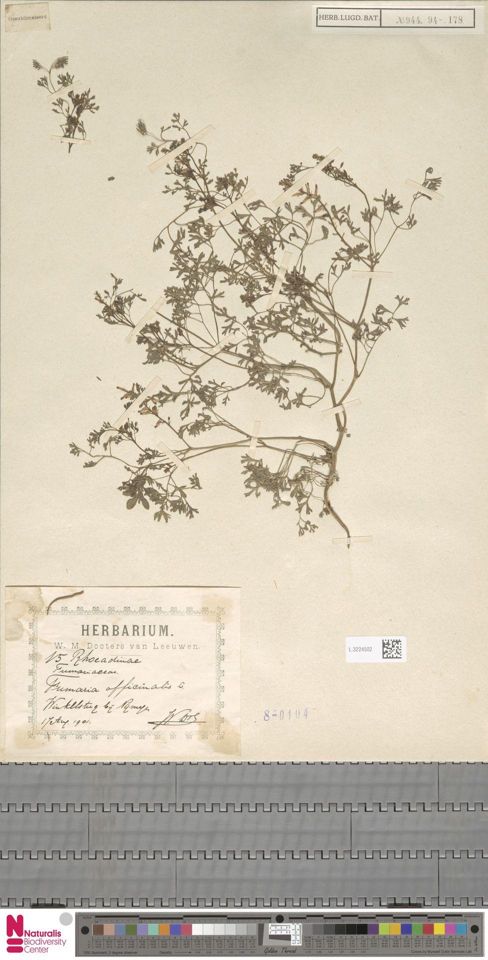 L.3224502 | Fumaria officinalis L.