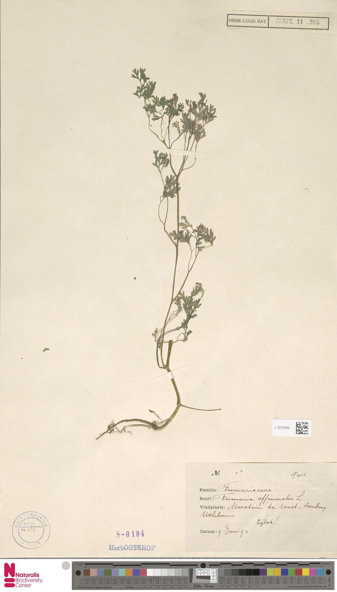 L.3224506 | Fumaria officinalis L.