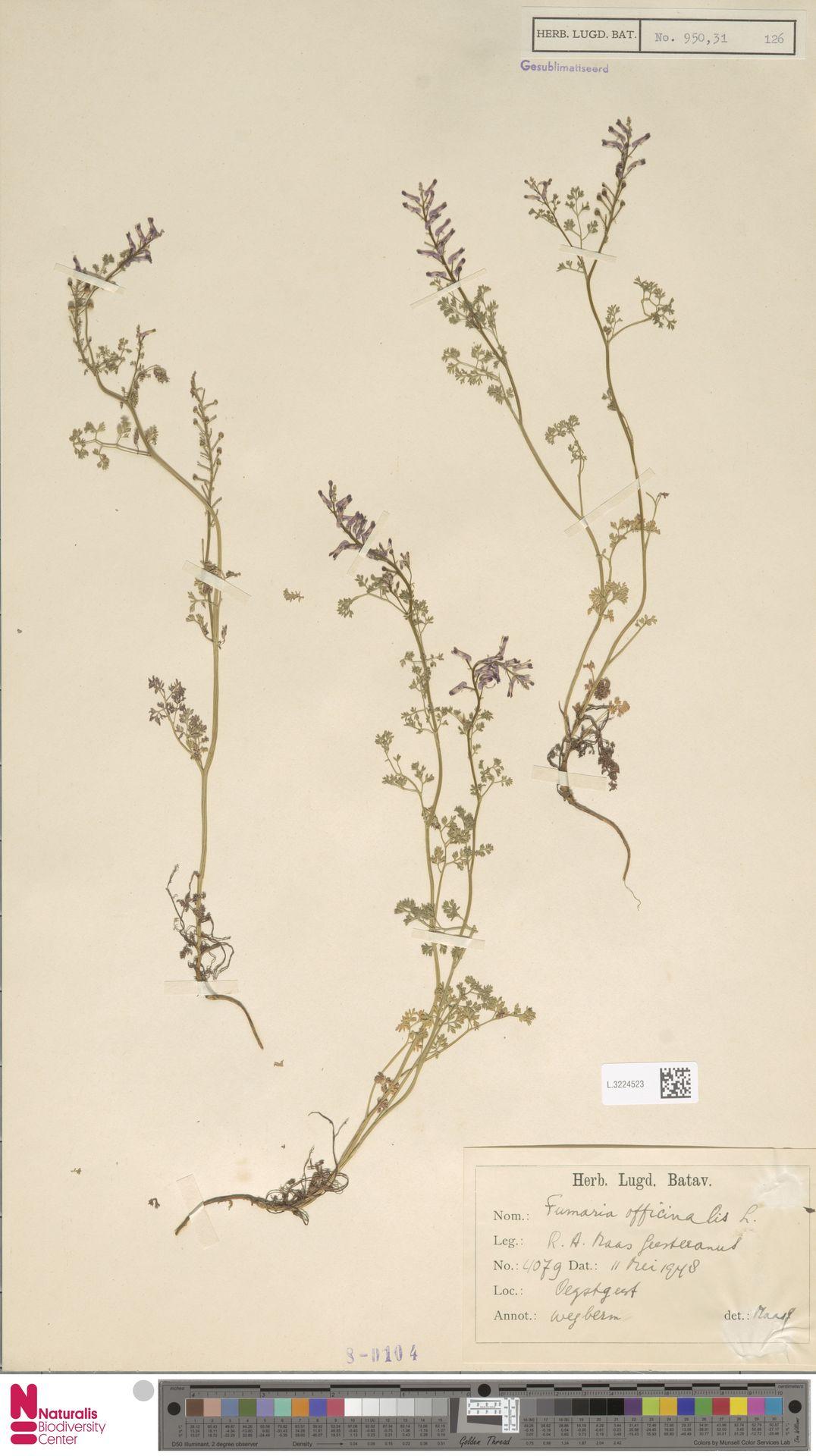 L.3224523   Fumaria officinalis L.