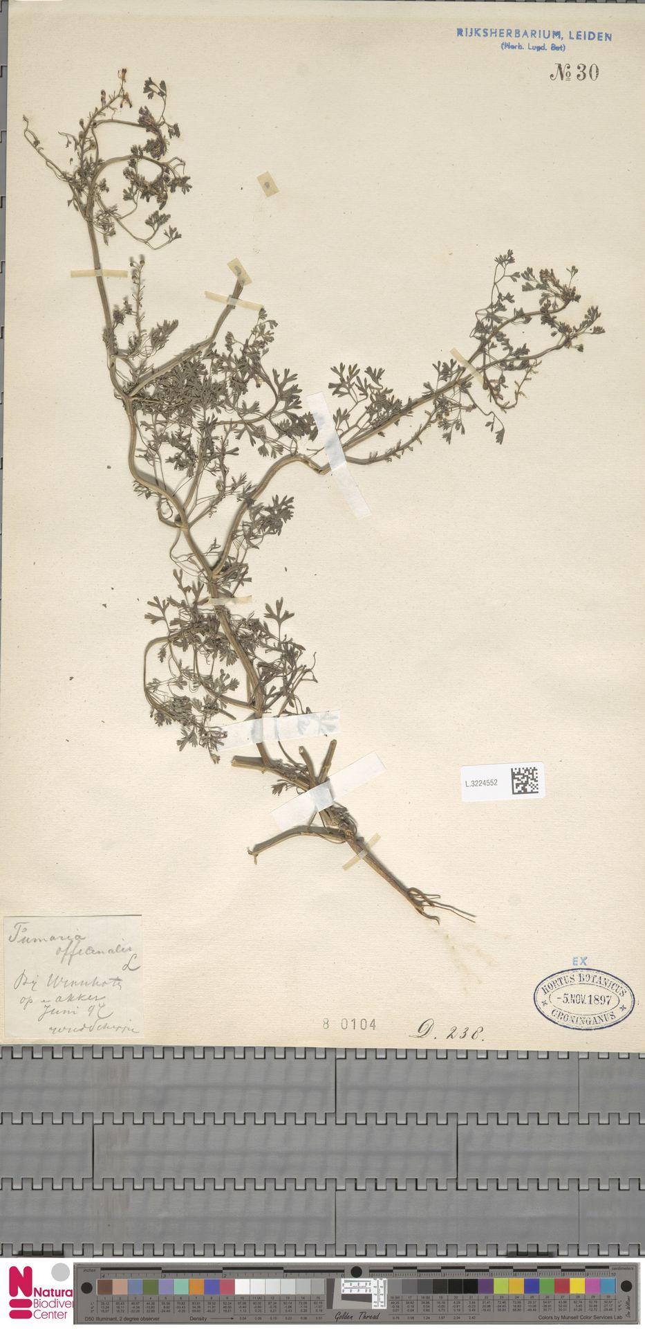 L.3224552 | Fumaria officinalis L.