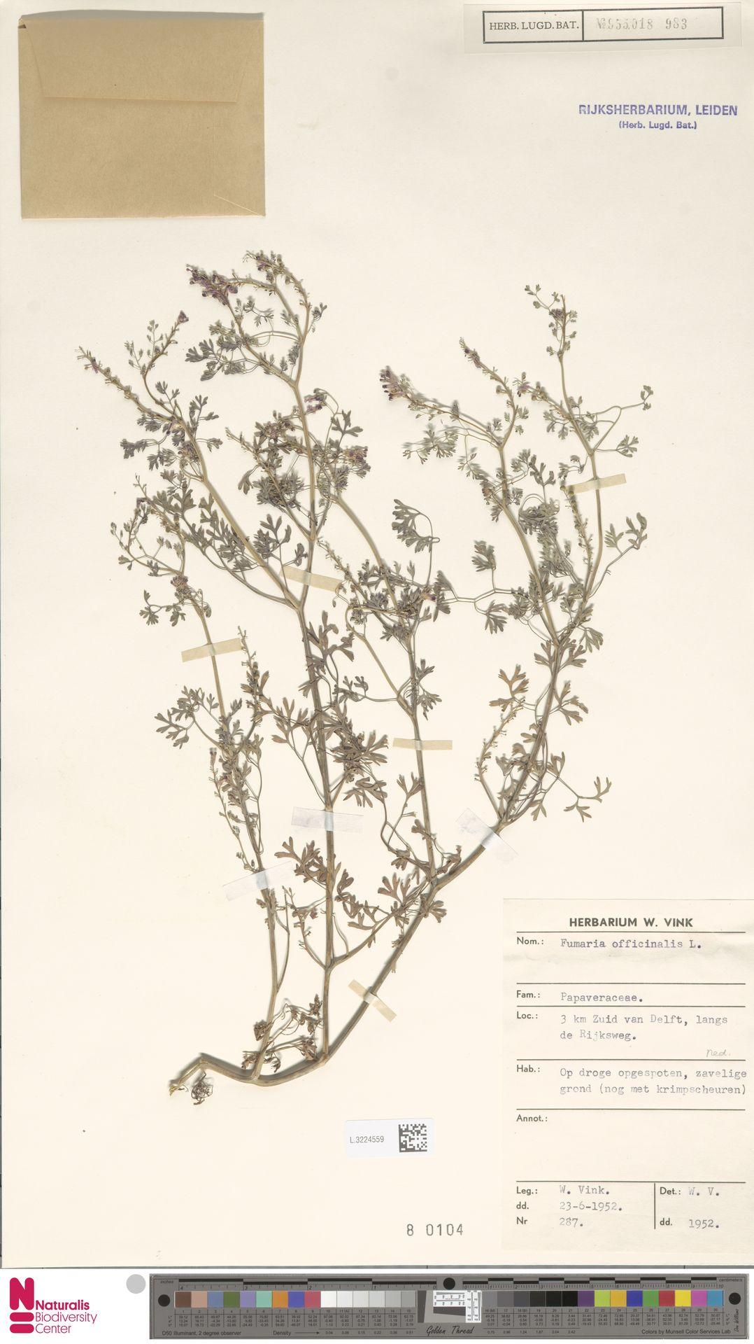 L.3224559 | Fumaria officinalis L.