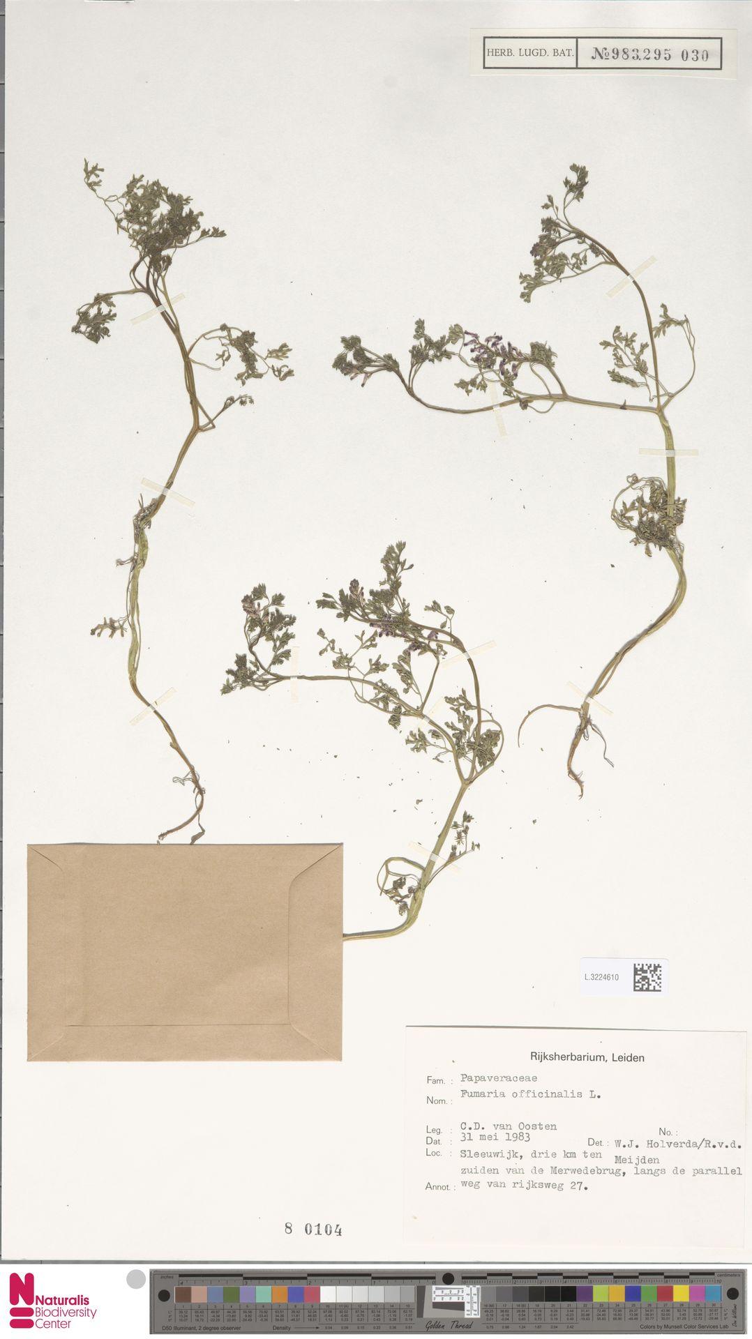 L.3224610 | Fumaria officinalis L.