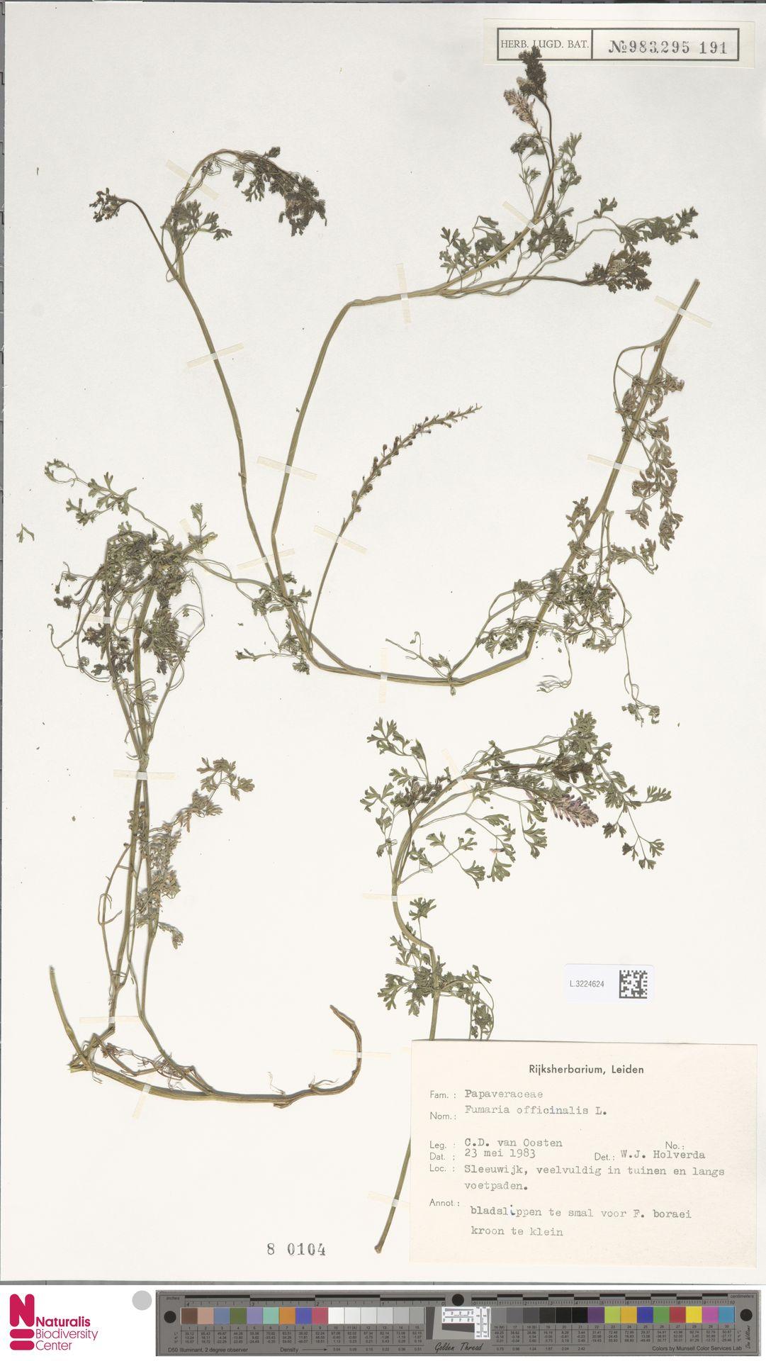 L.3224624 | Fumaria officinalis L.