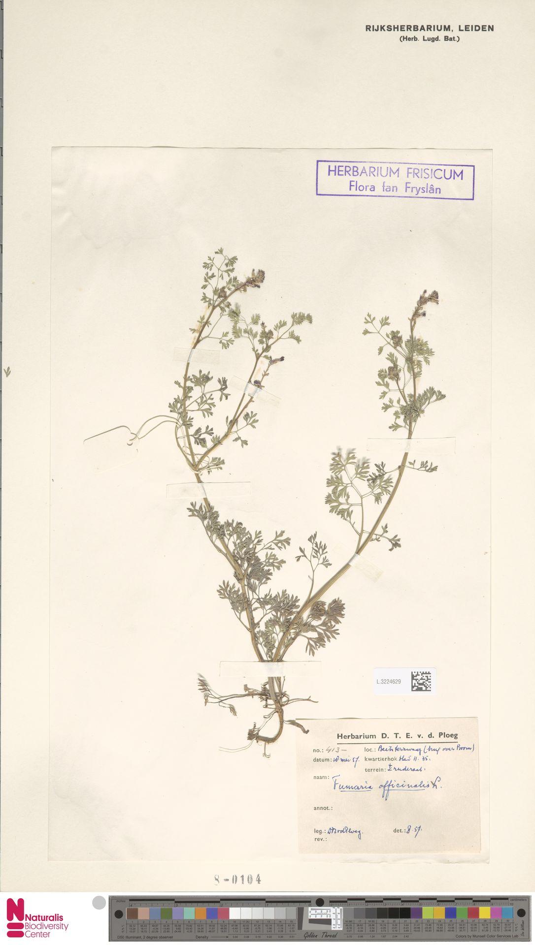 L.3224629 | Fumaria officinalis L.