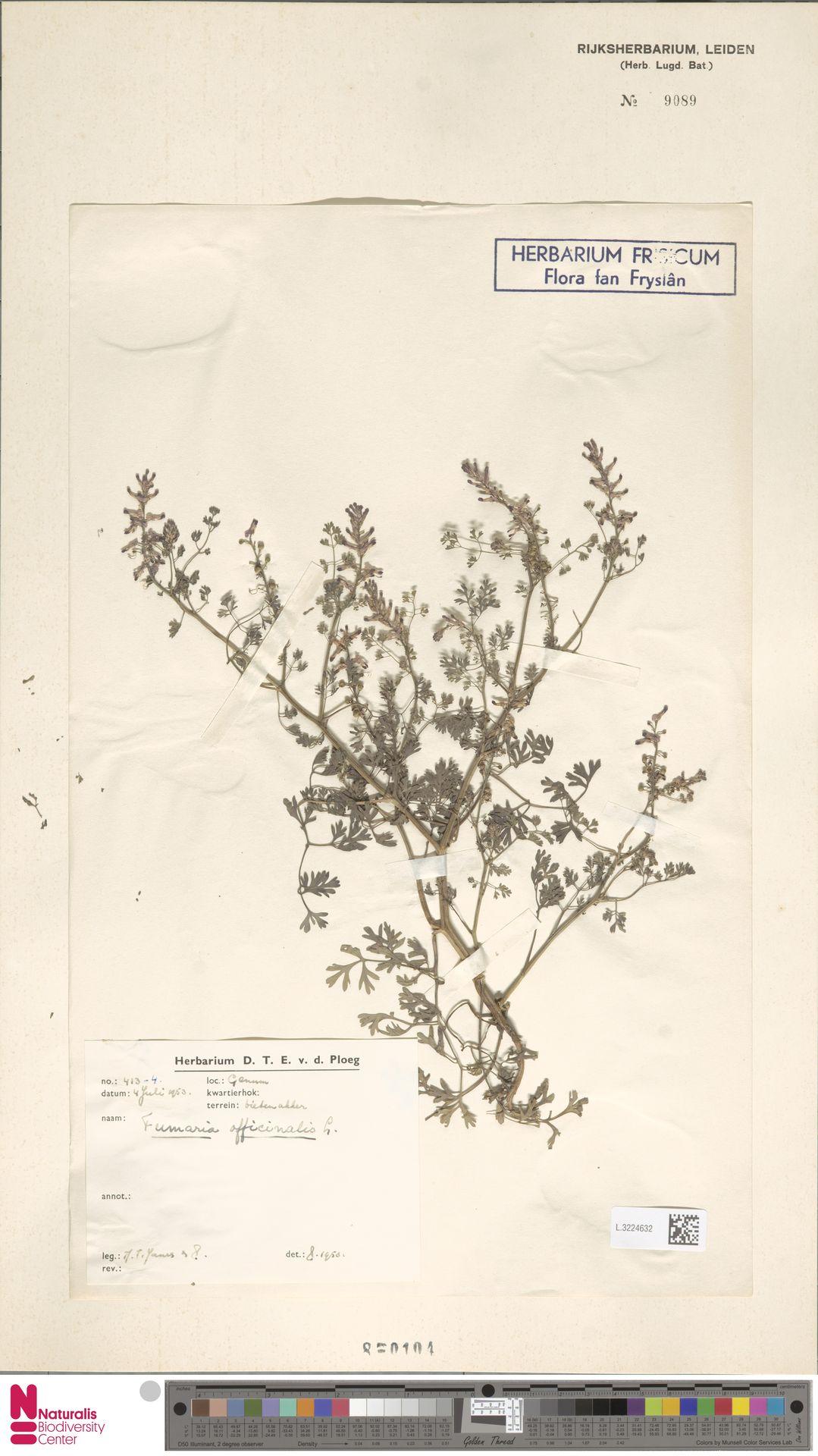 L.3224632 | Fumaria officinalis L.