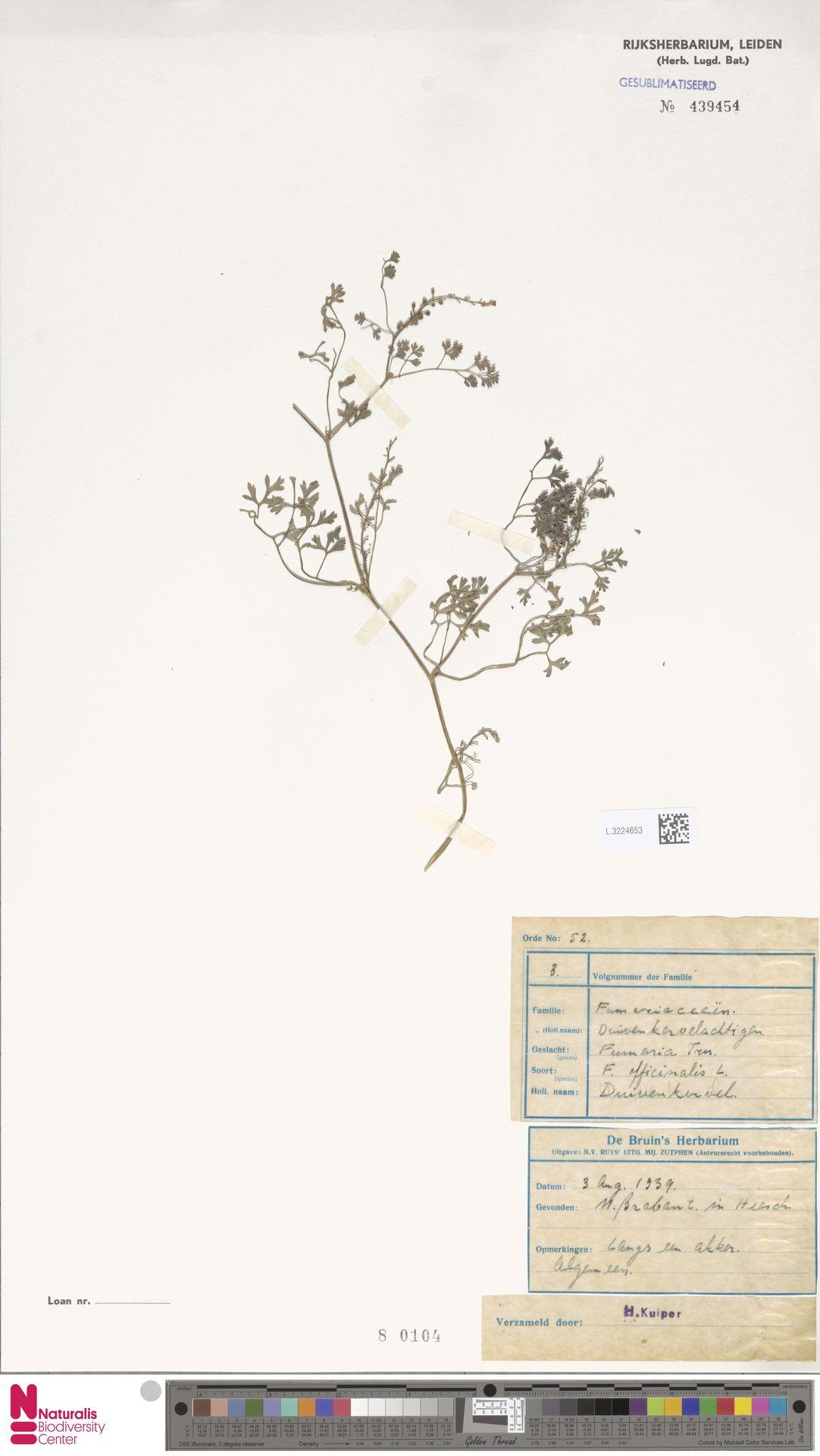 L.3224653 | Fumaria officinalis L.