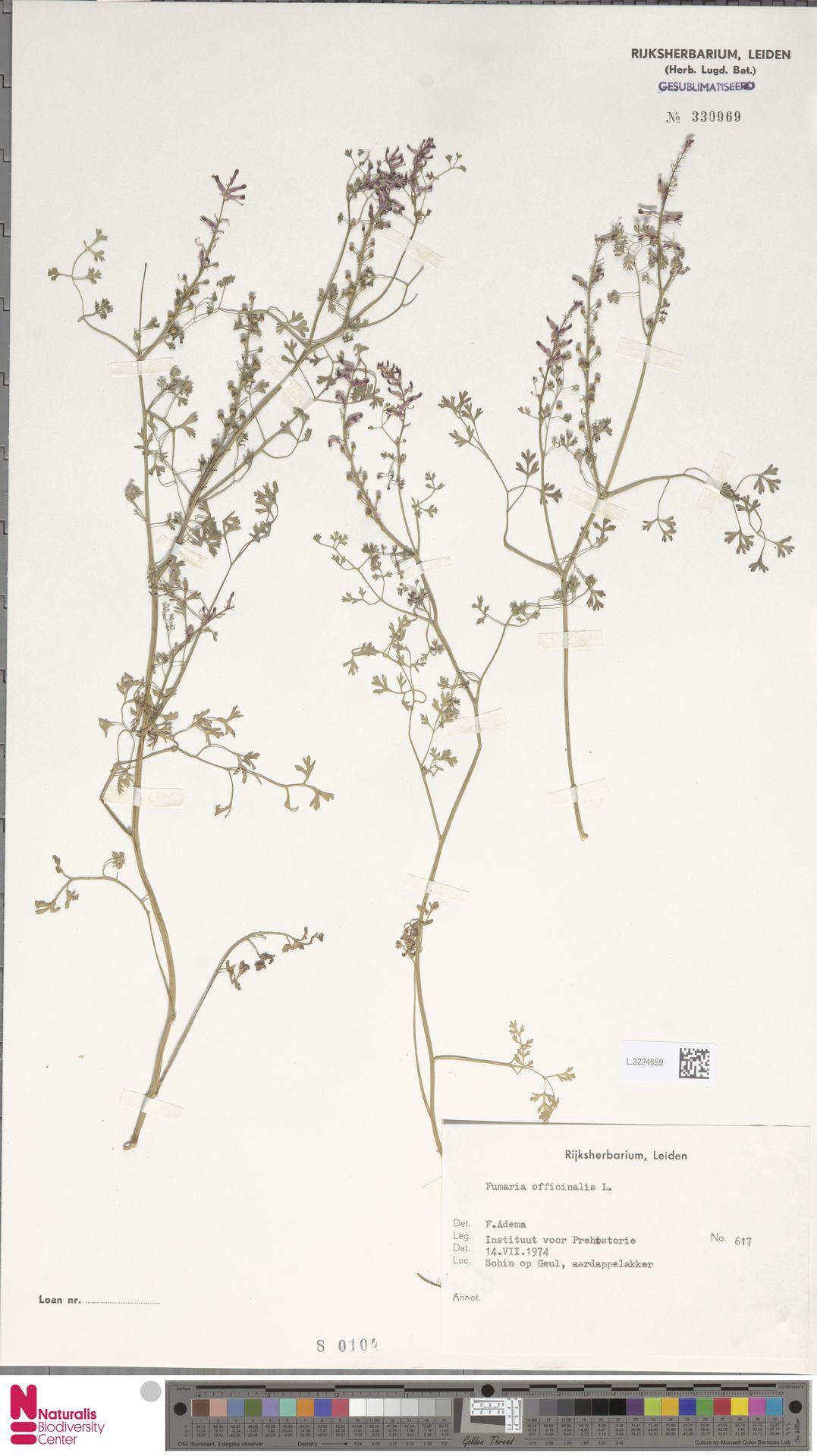 L.3224659   Fumaria officinalis L.
