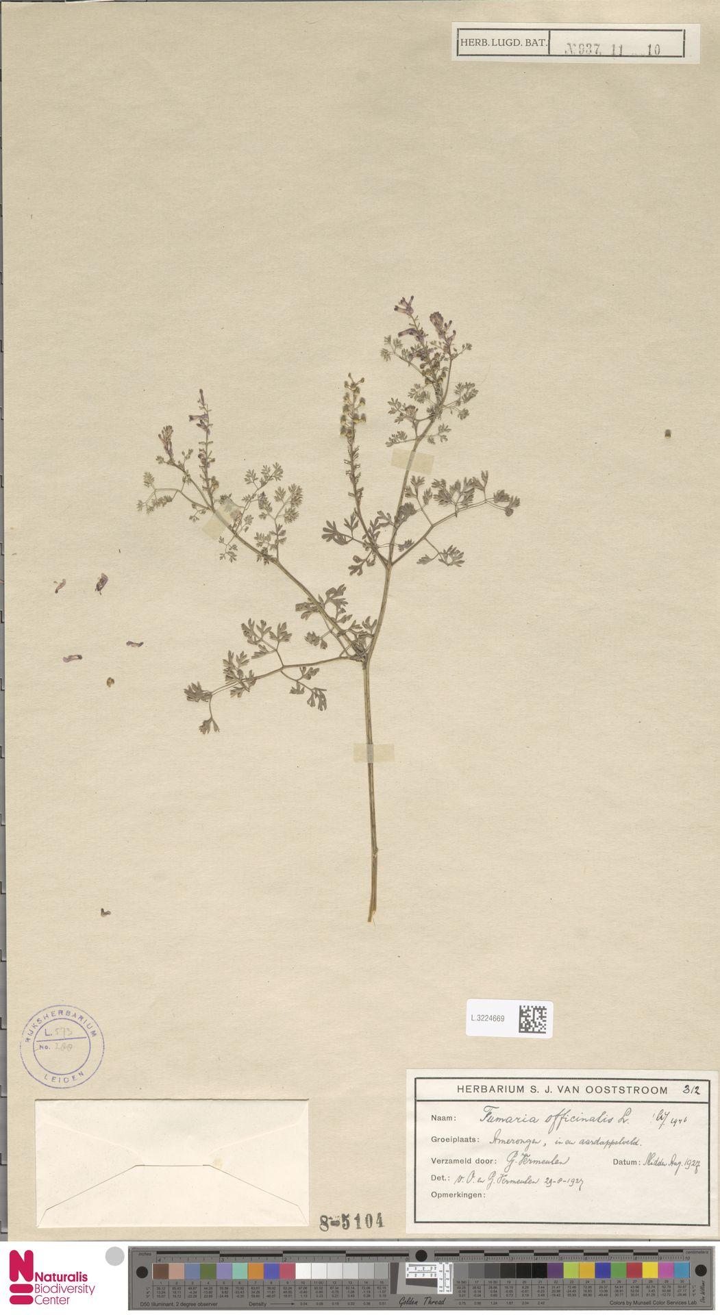 L.3224669 | Fumaria officinalis L.