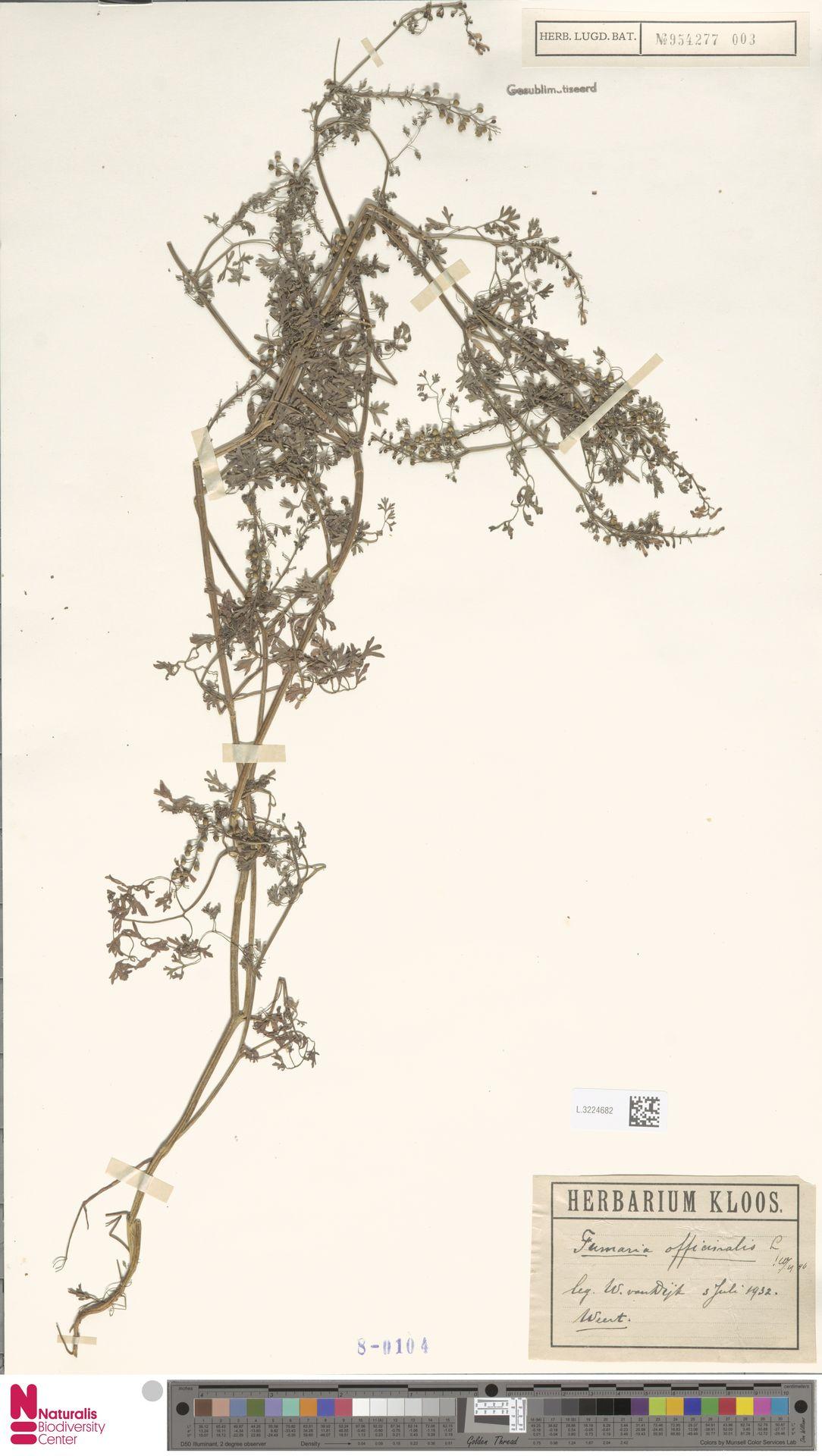 L.3224682   Fumaria officinalis L.