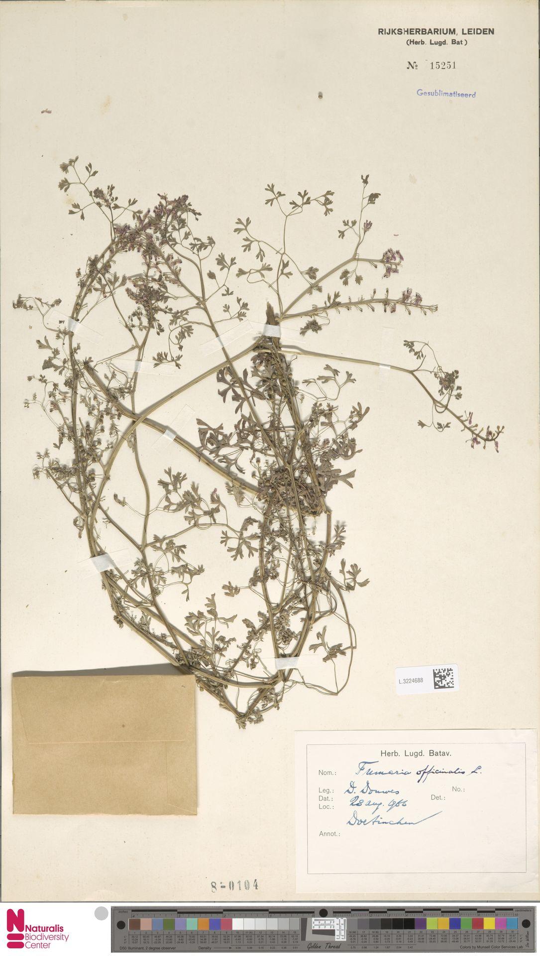 L.3224688   Fumaria officinalis L.