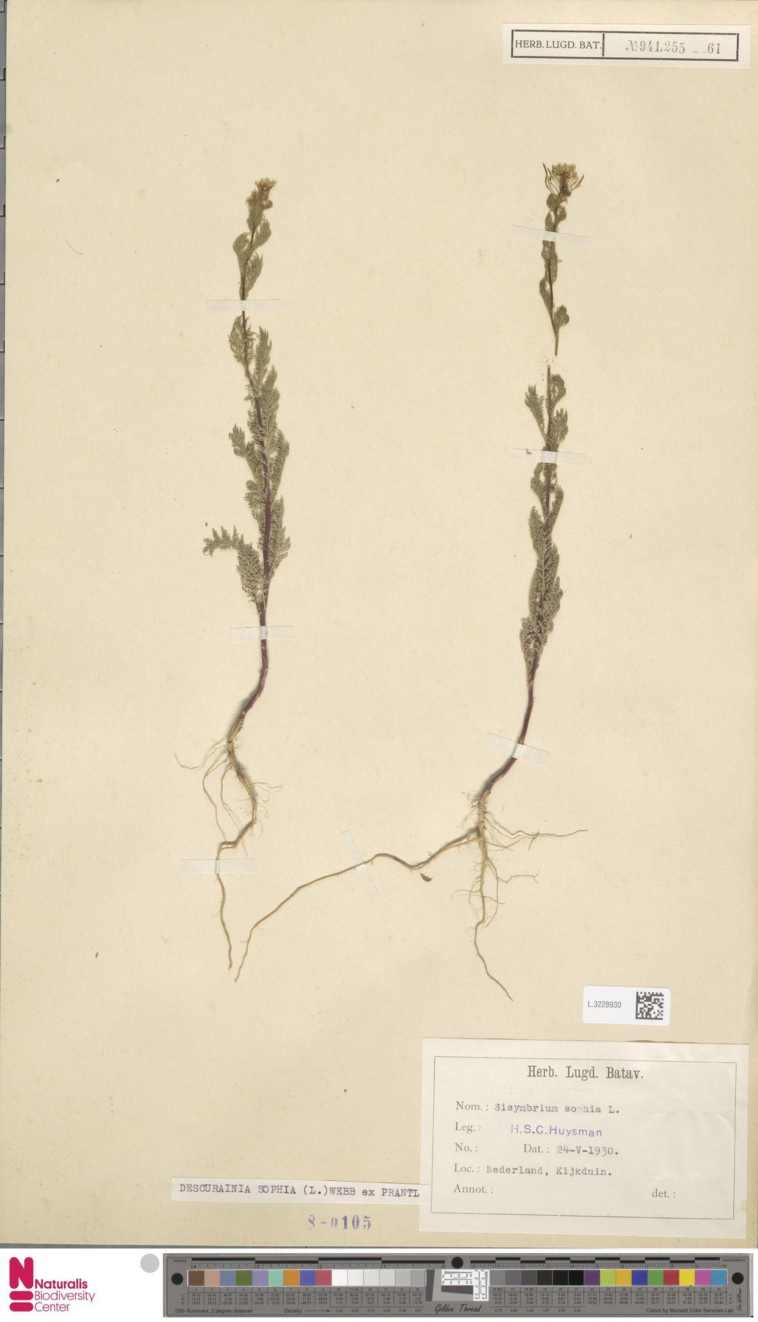 L.3228930 | Descurainia sophia (L.) Webb ex Prantl