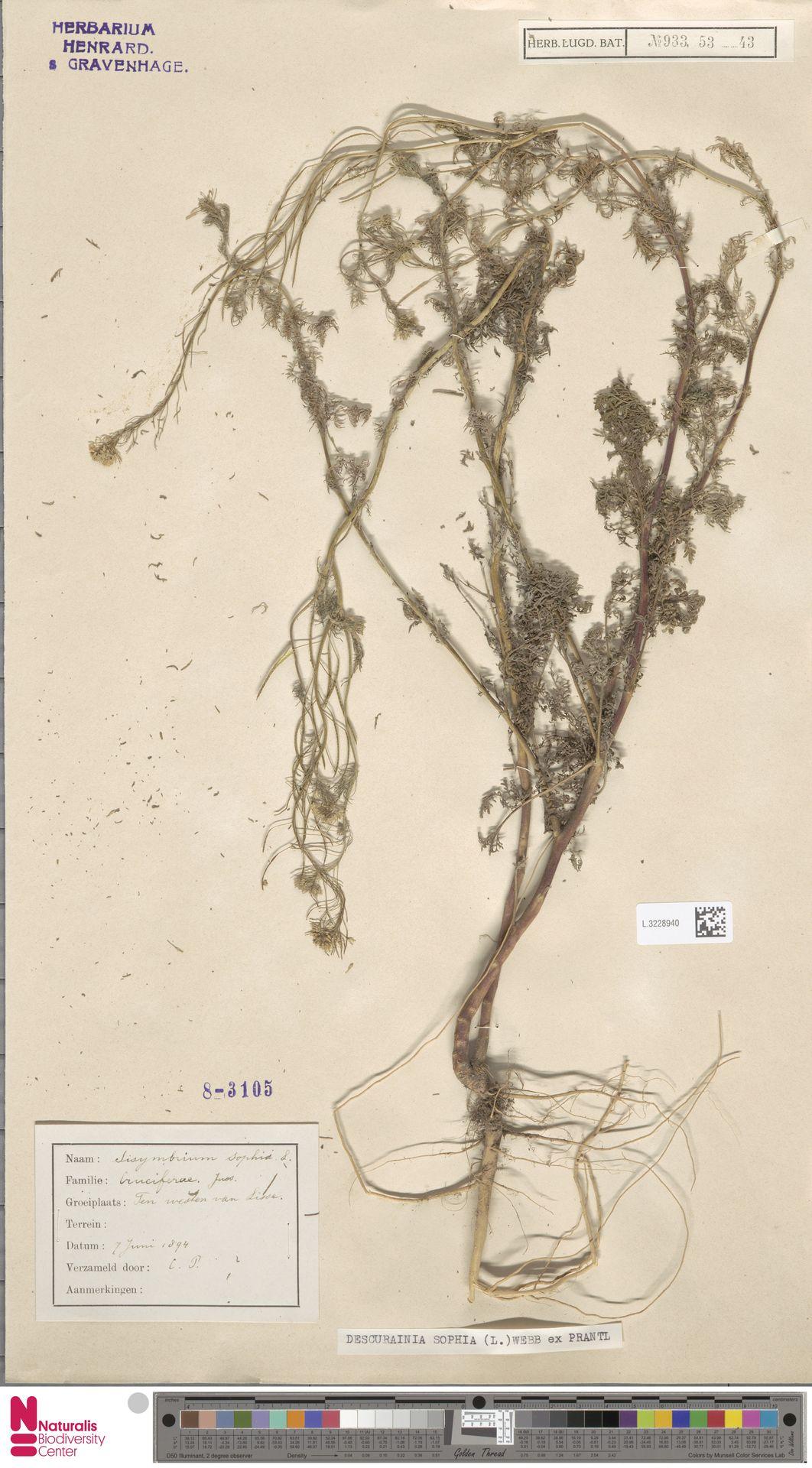 L.3228940   Descurainia sophia (L.) Webb ex Prantl