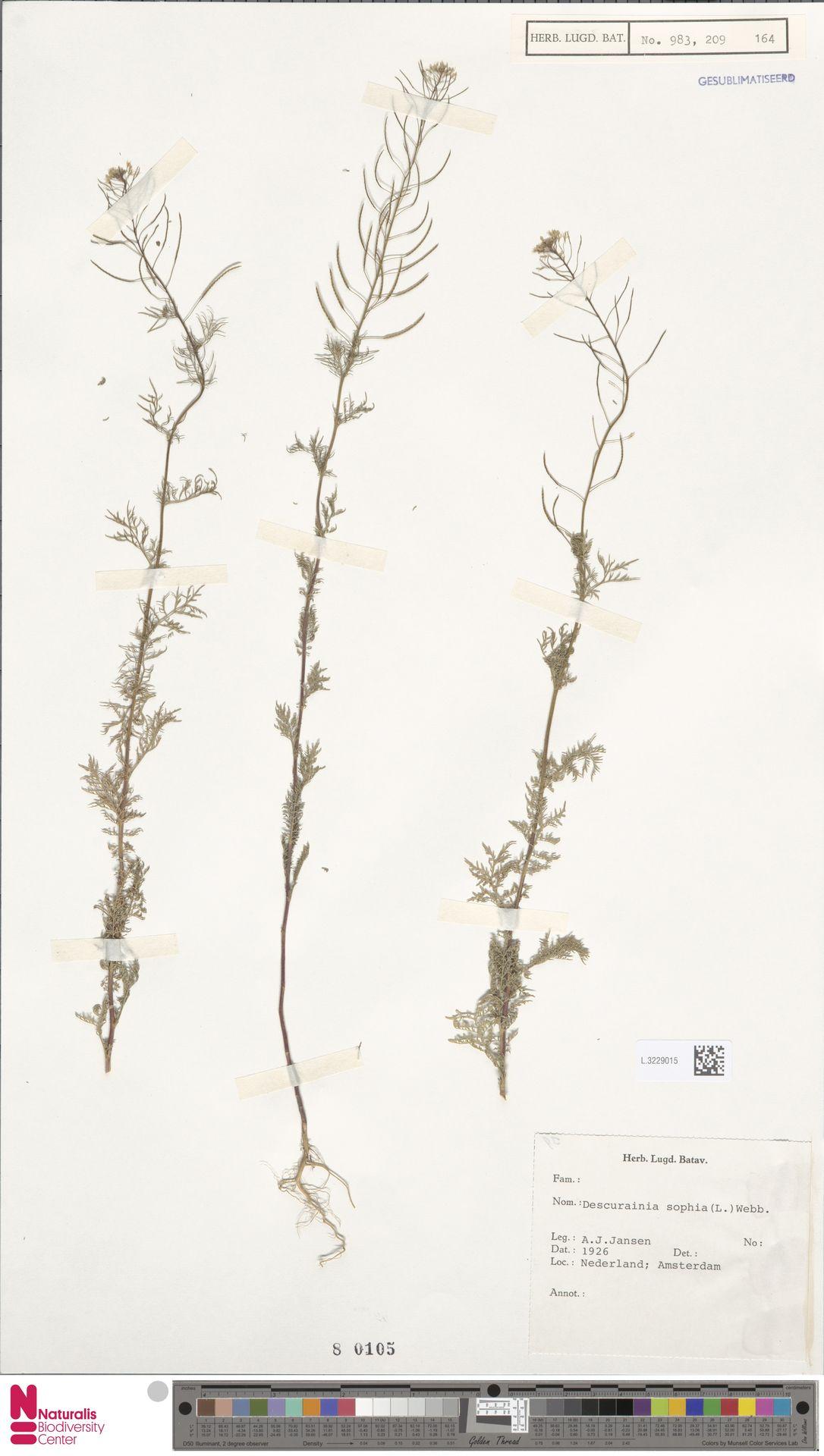 L.3229015 | Descurainia sophia (L.) Webb ex Prantl