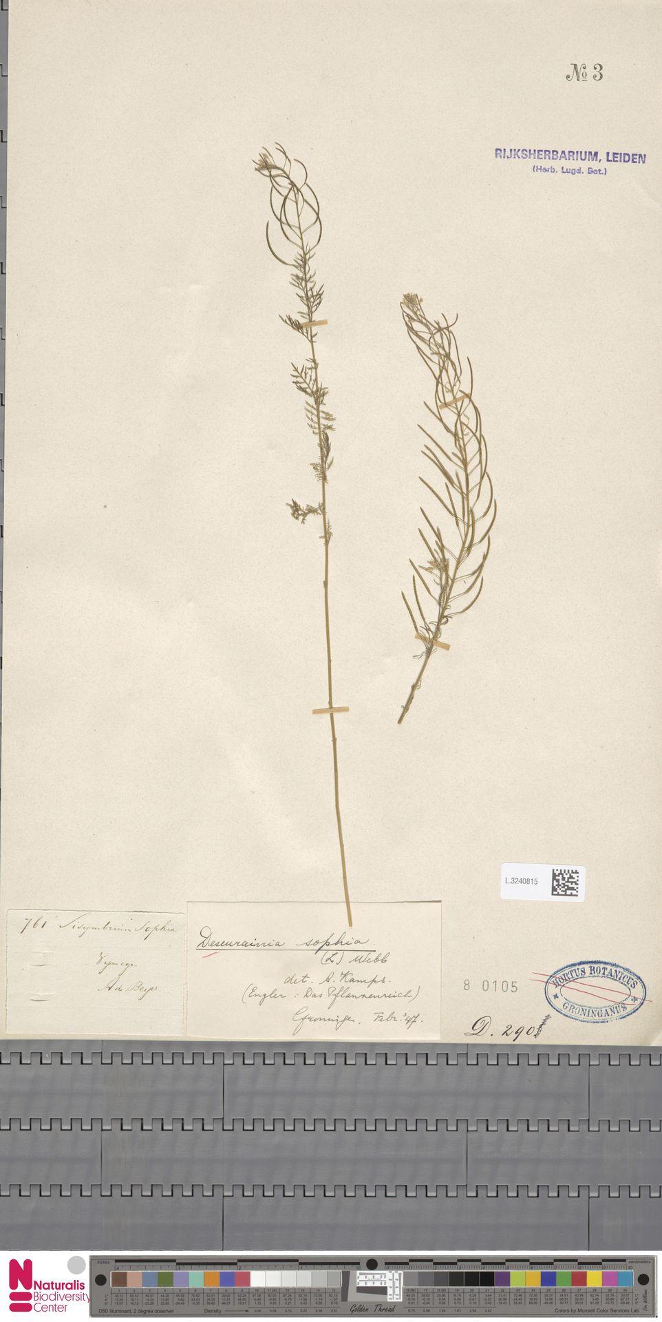L.3240815   Descurainia sophia (L.) Webb ex Prantl