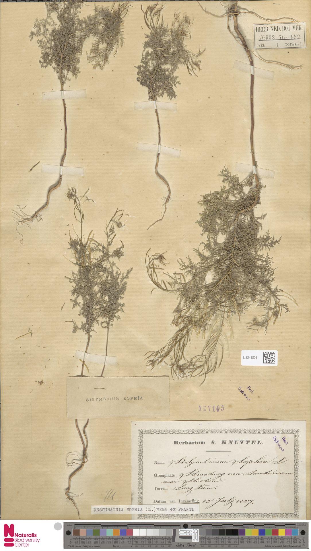 L.3241806   Descurainia sophia (L.) Webb ex Prantl