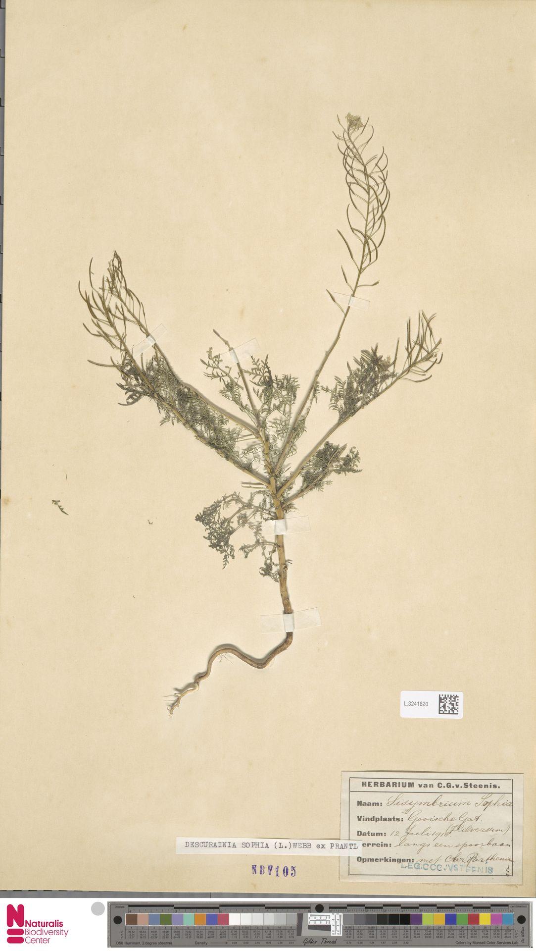 L.3241820 | Descurainia sophia (L.) Webb ex Prantl