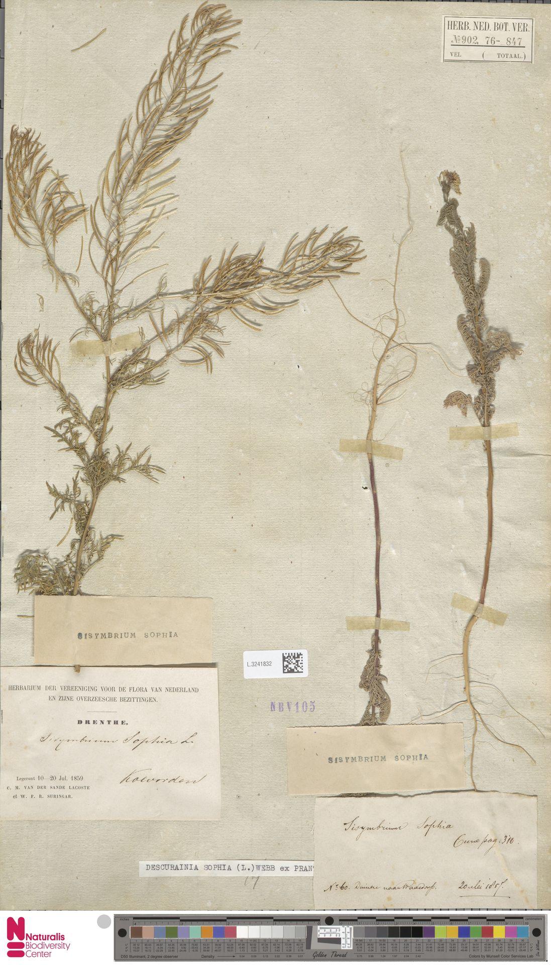 L.3241832 | Descurainia sophia (L.) Webb ex Prantl