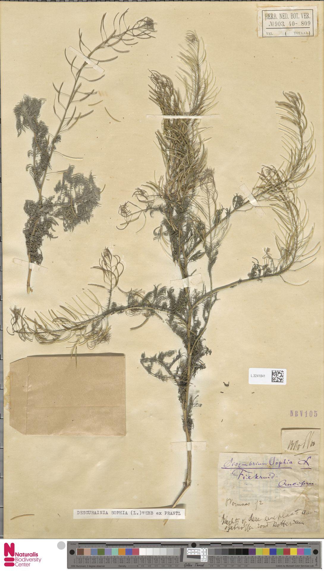 L.3241841 | Descurainia sophia (L.) Webb ex Prantl